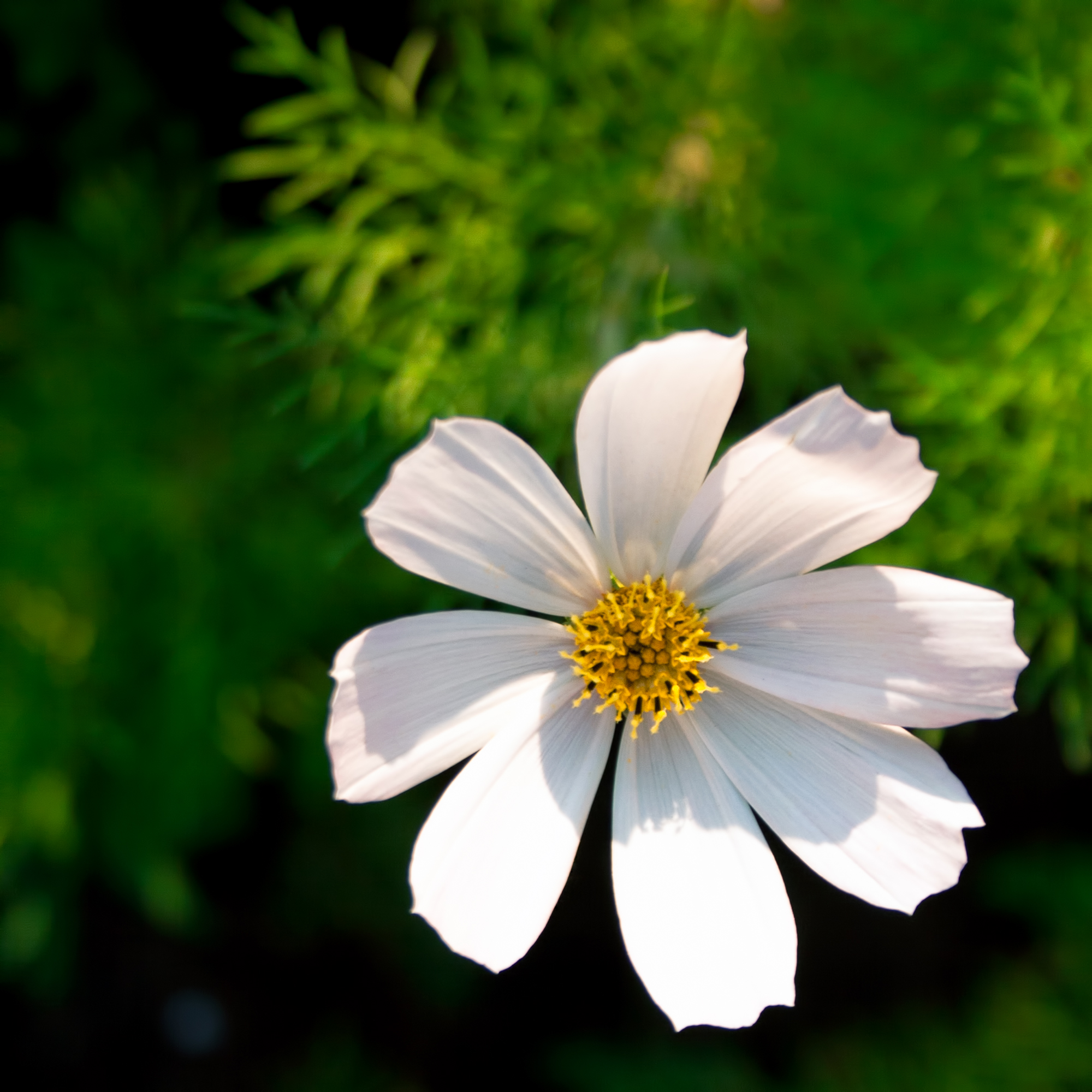 White flower, Bloom, Blooming, Blossom, Blurred, HQ Photo