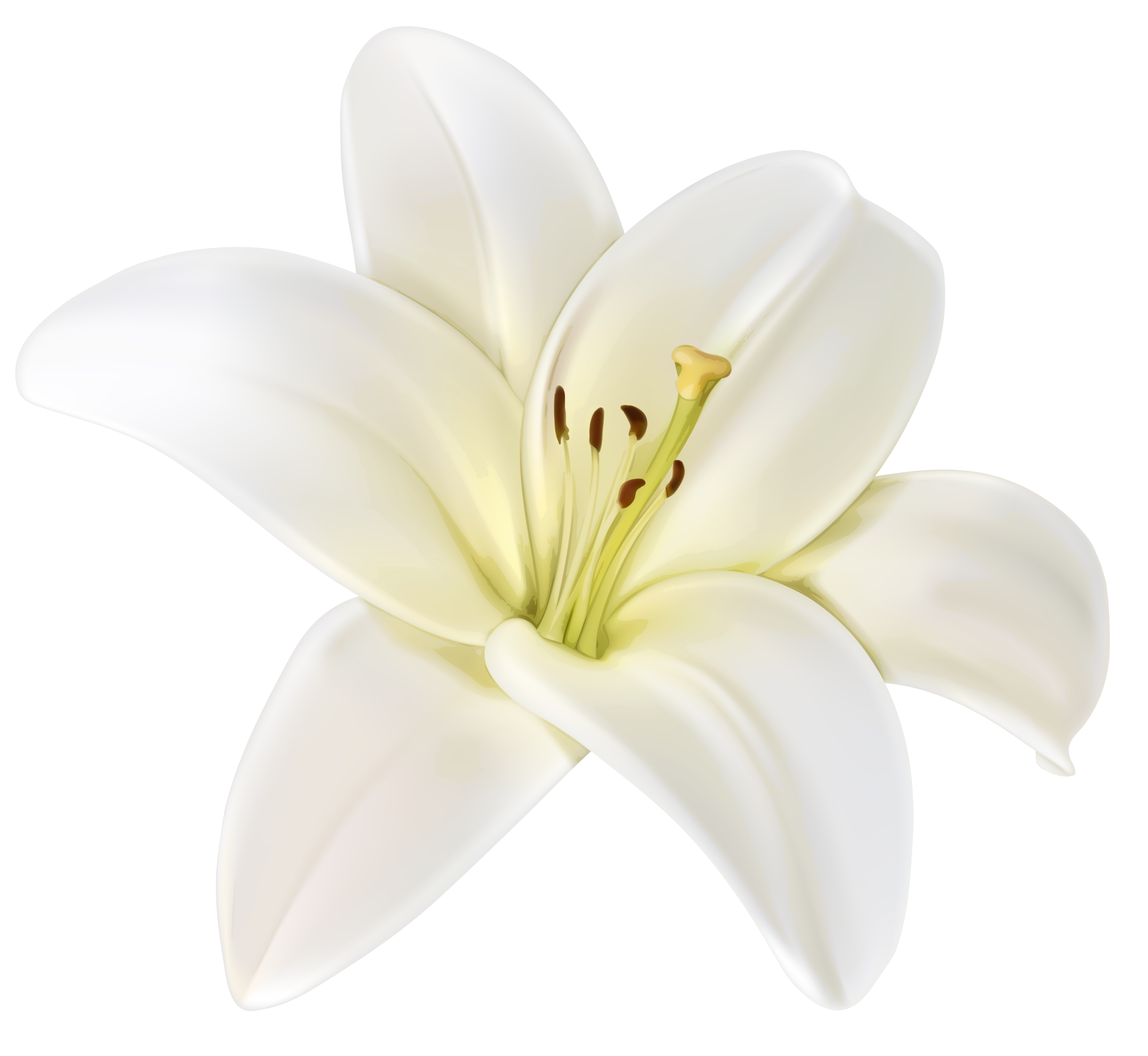 Beautiful White Flower PNG Clipart Image | Gallery Yopriceville ...