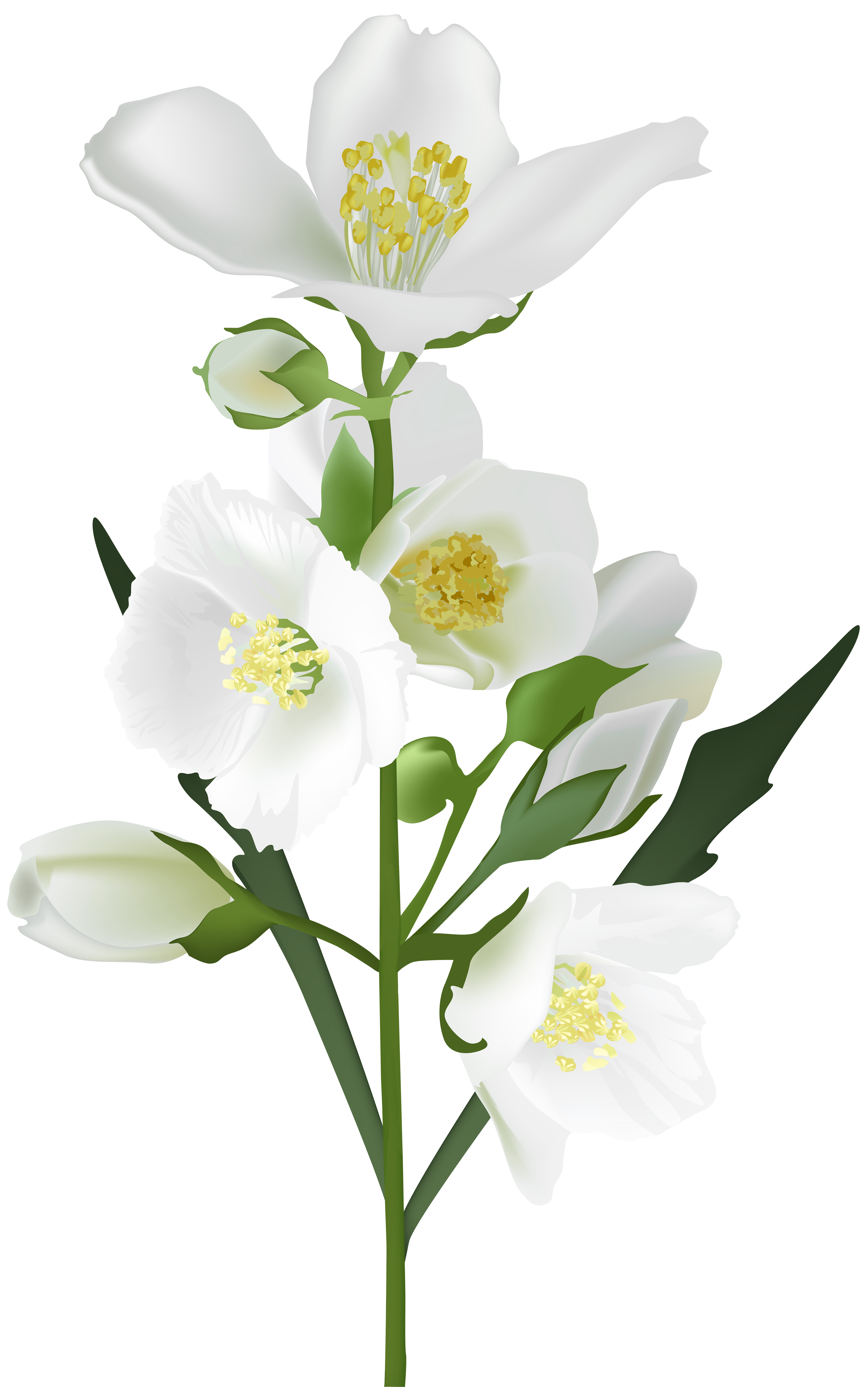 White Flower PNG Clip Art Image | Gallery Yopriceville - High ...