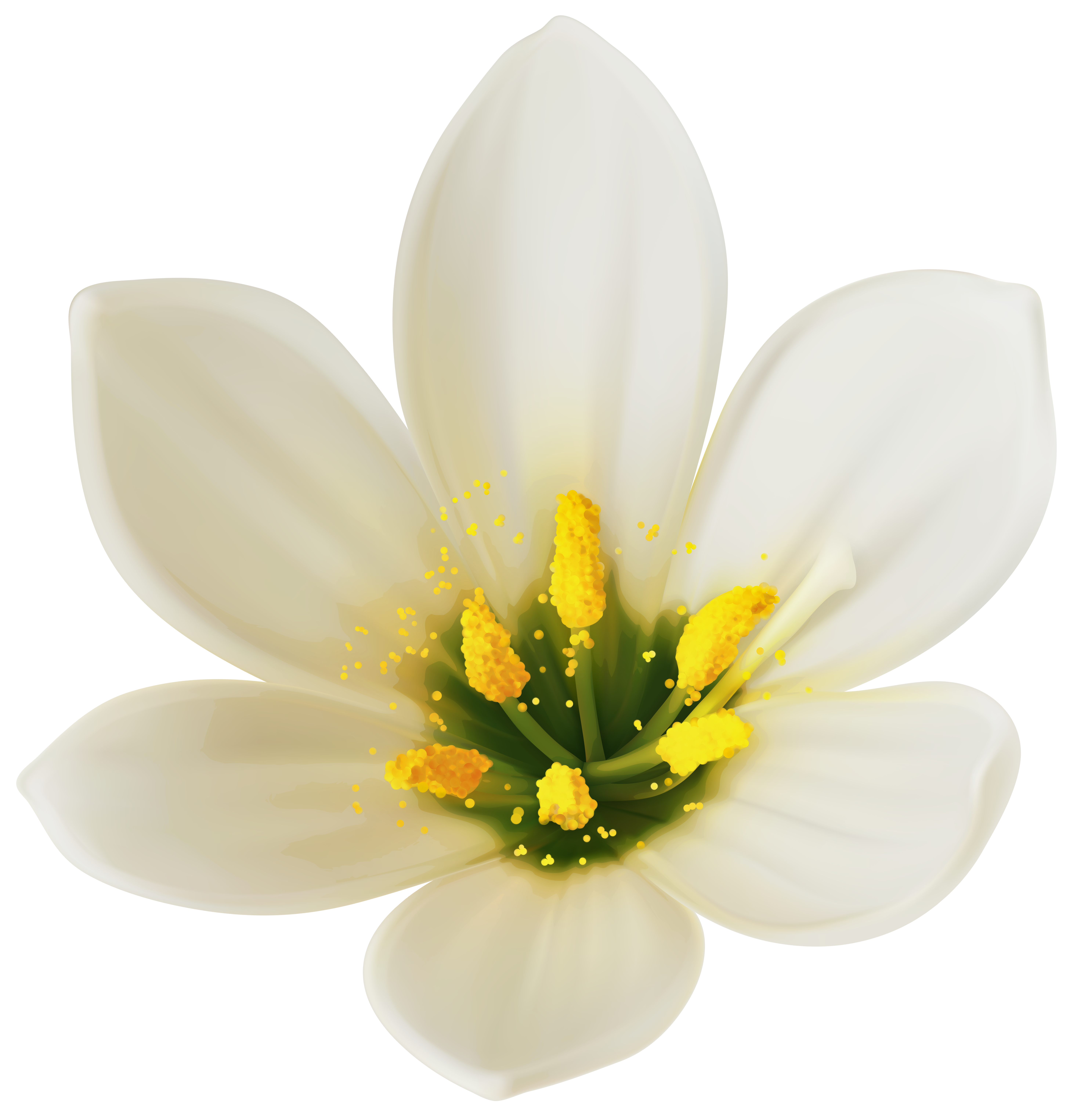 Free photo white flower white plants flower free download white flower png clipart image gallery yopriceville high mightylinksfo