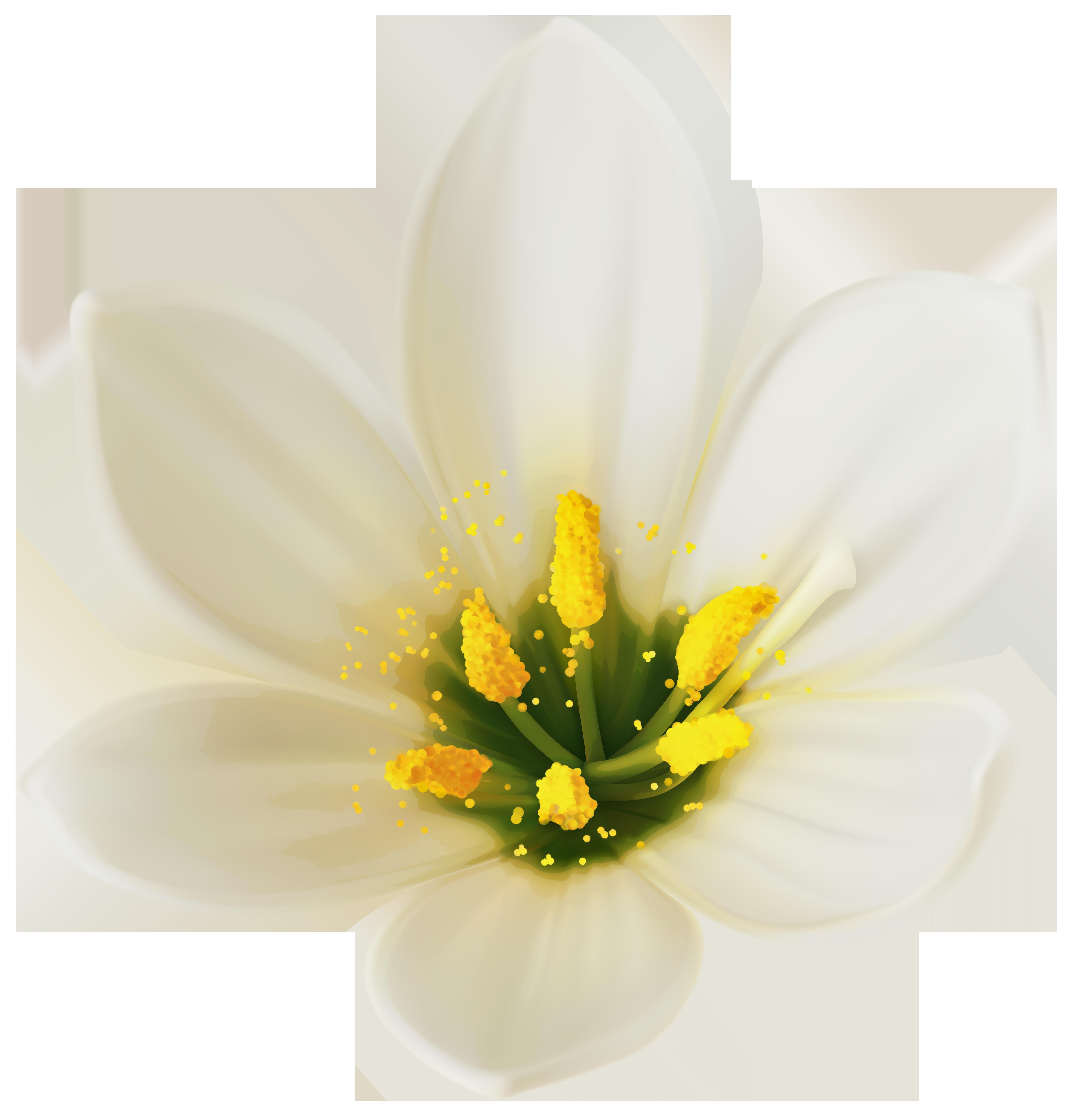 Free photo white flower white plants flower non commercial white flower mightylinksfo