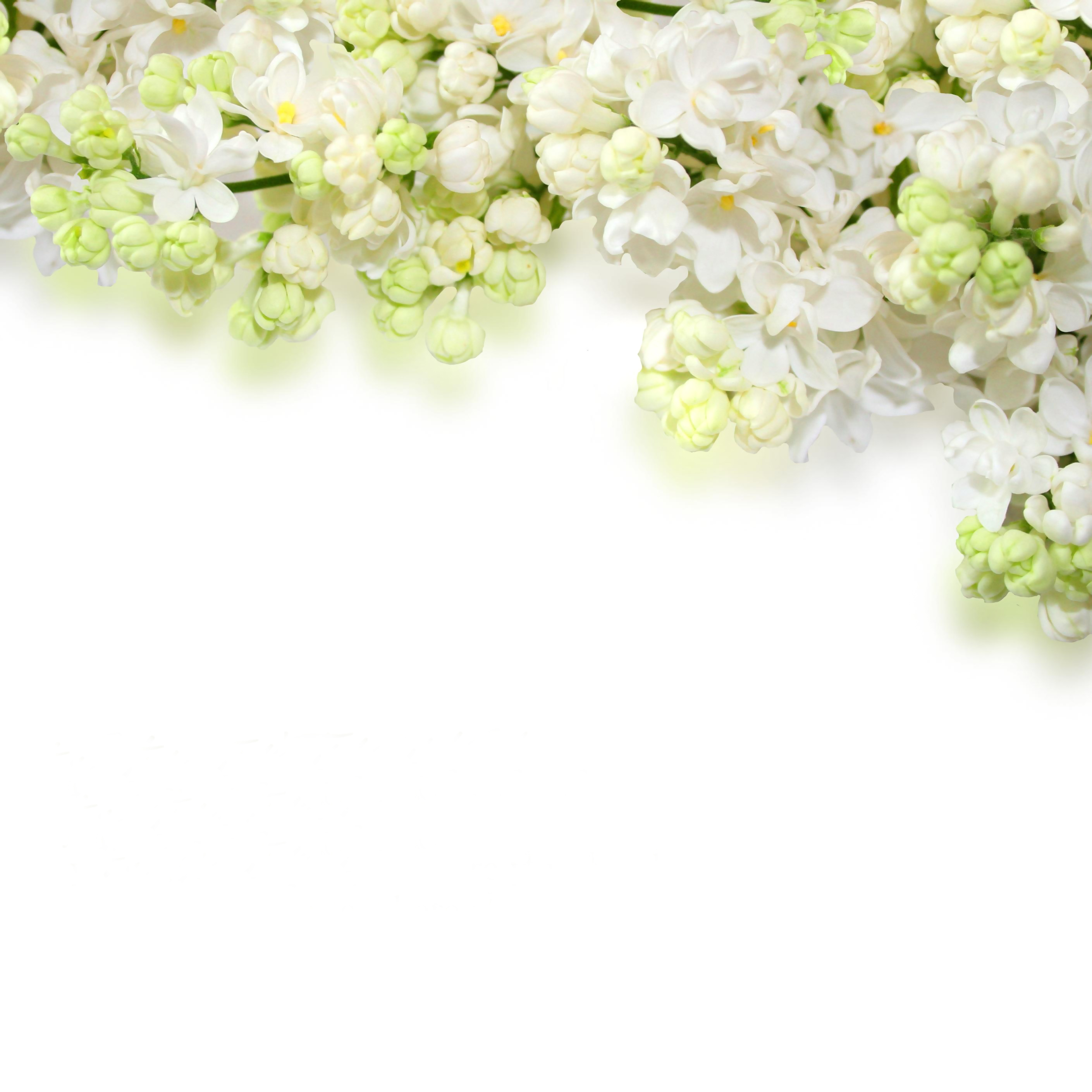 Free Photo White Flower Background Abstract Bloom Blossom