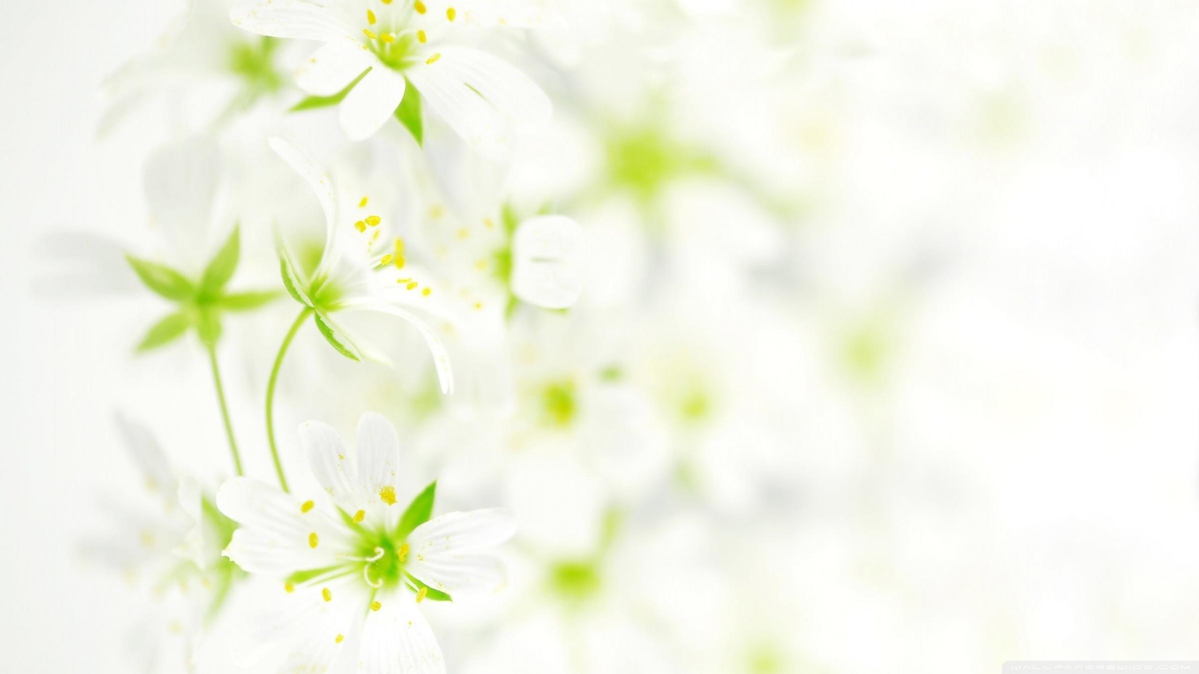 Free Photo White Flower Background Soft Spring White Free