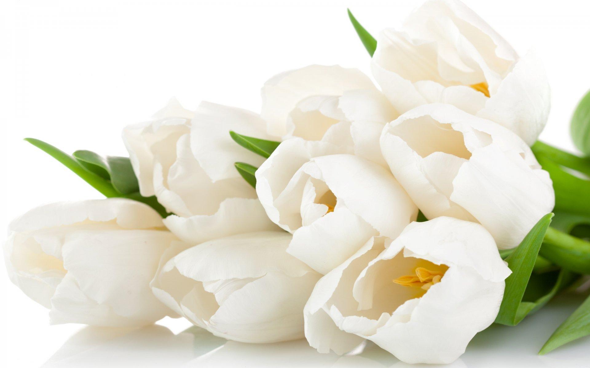 free photo white flower bouquet white flower bouquet free