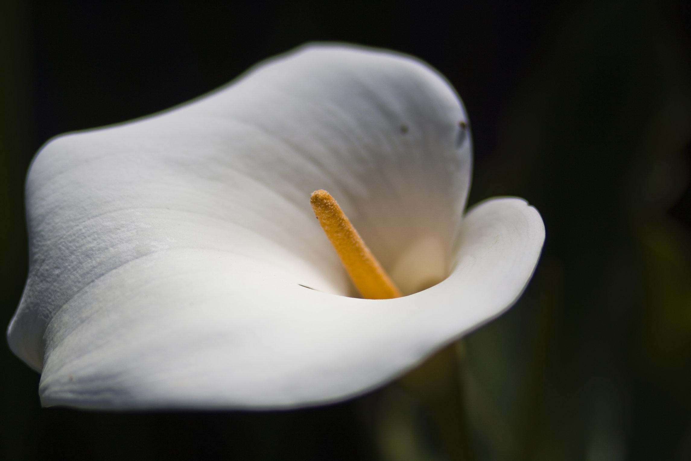 White Flower Closeup by TheLilPhotographer on DeviantArt