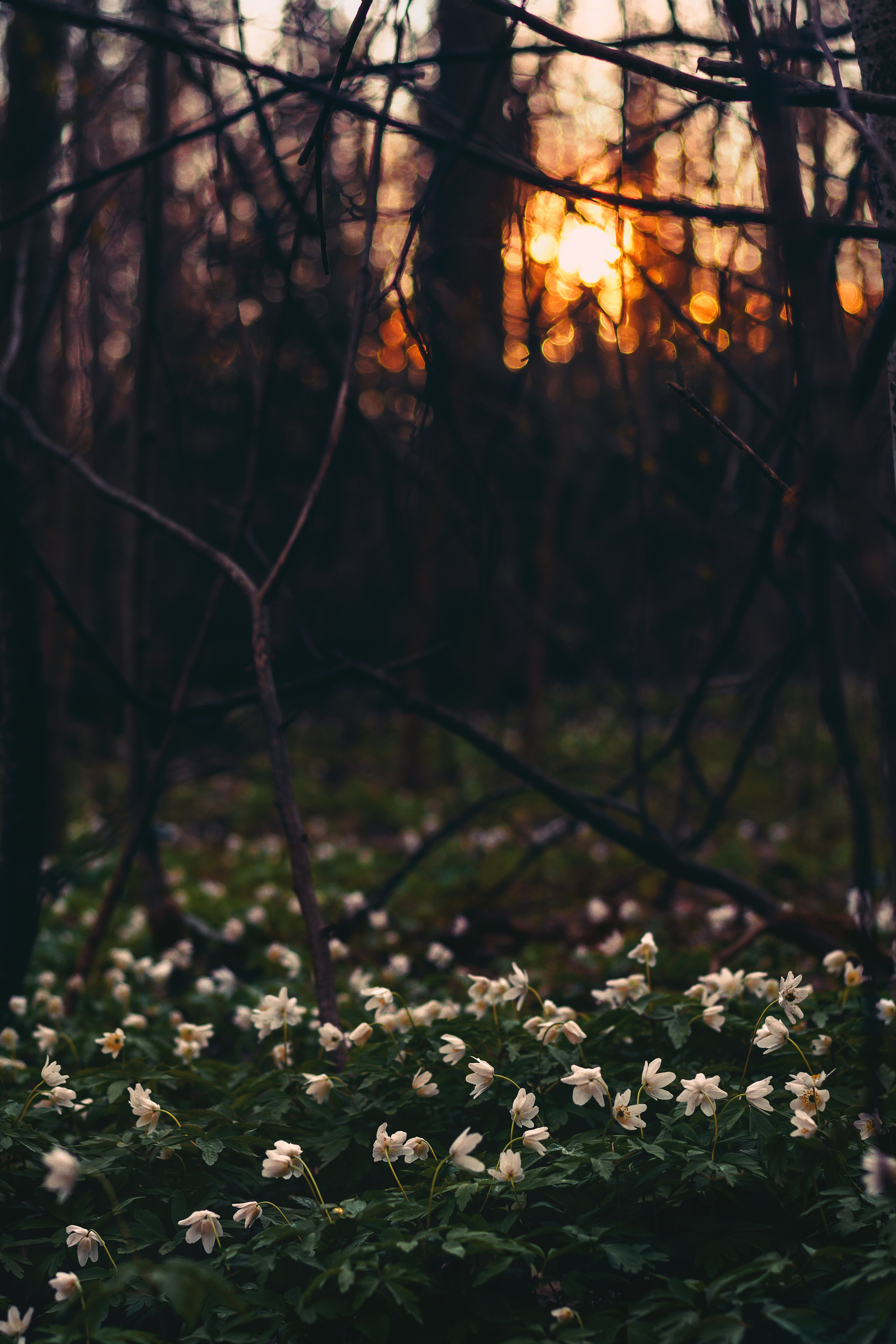 White Flower Field Under Twigs, Branches, Outdoors, White flowers, Trees, HQ Photo