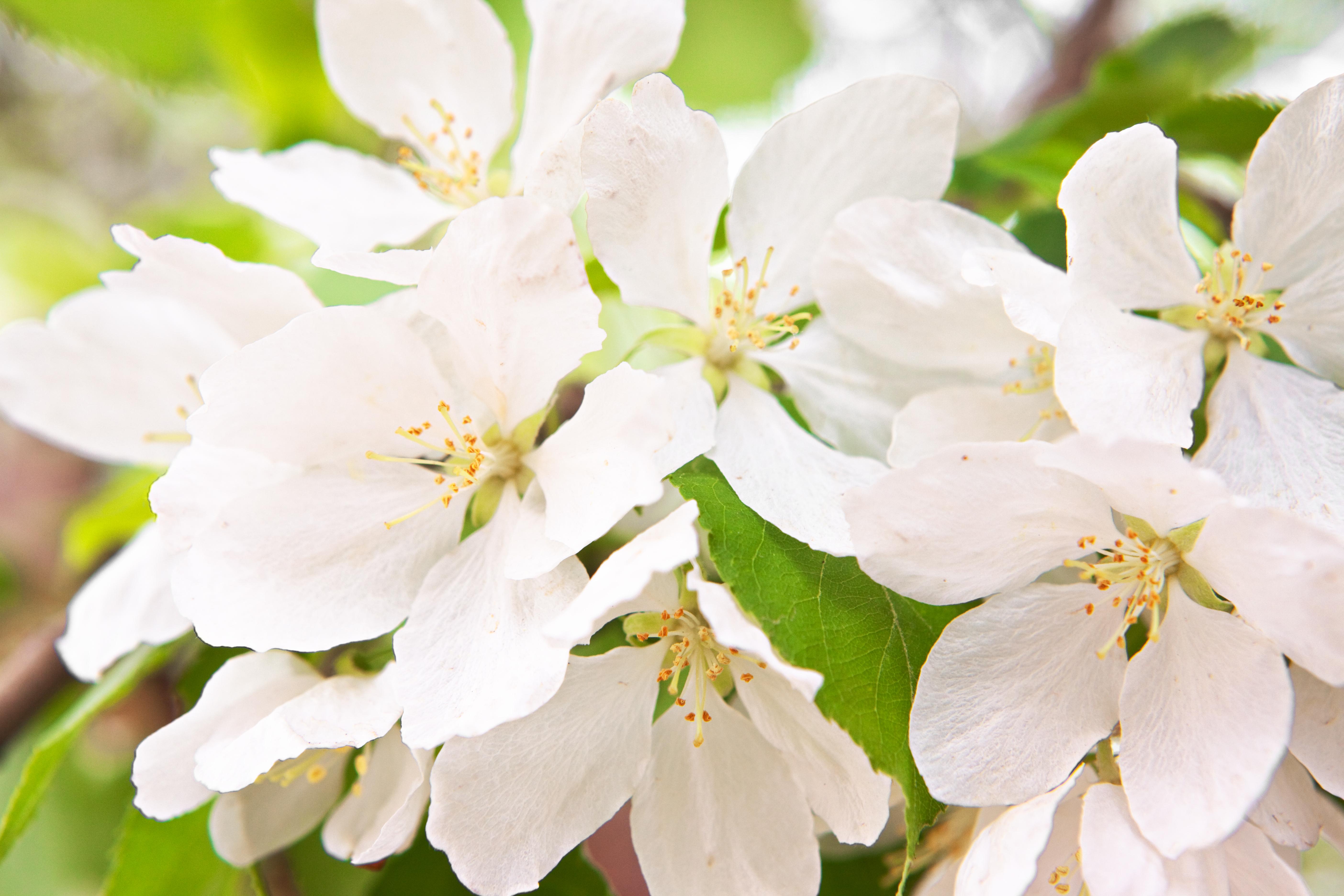 White flower in bloom photo