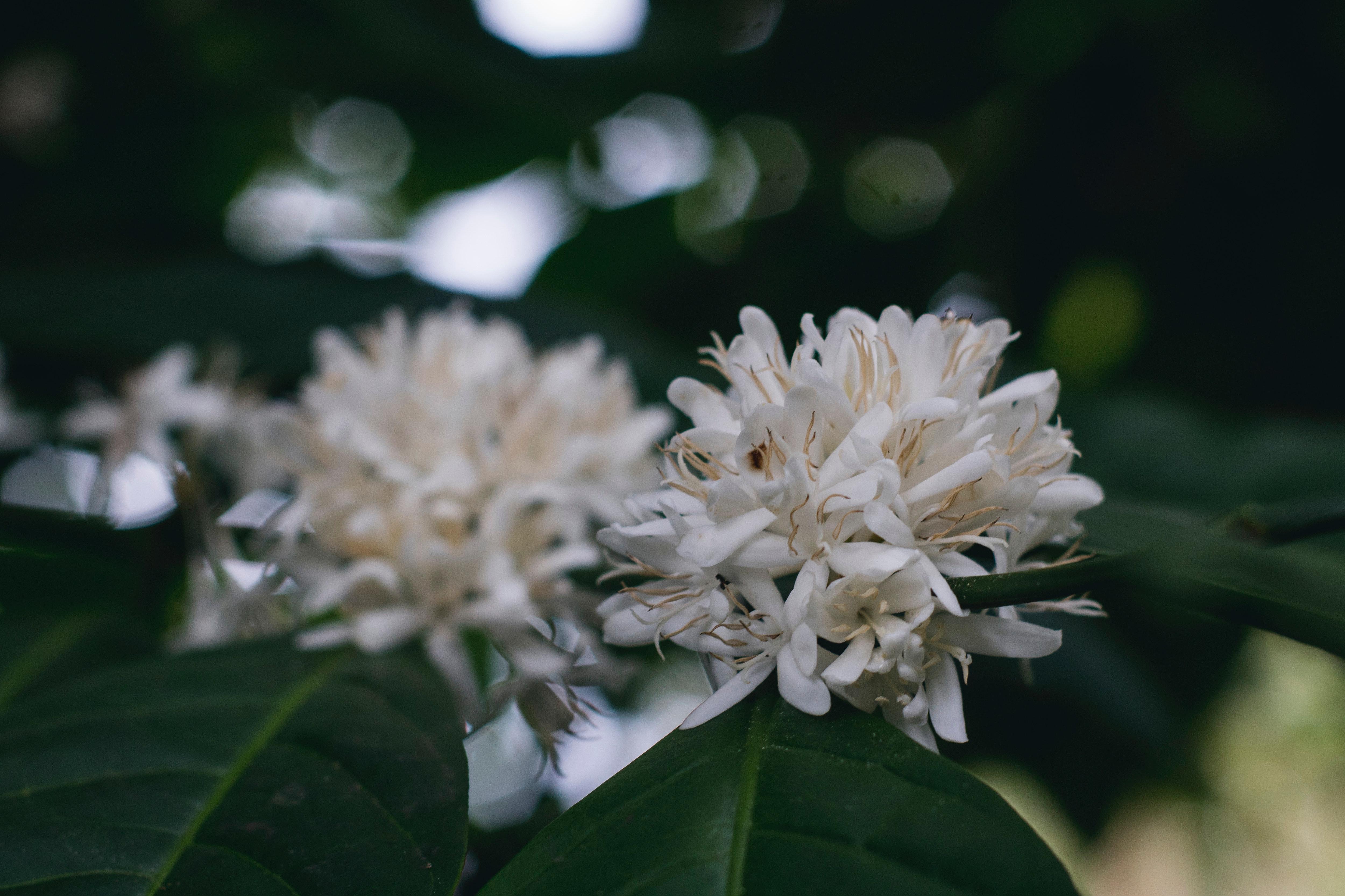 White flower in shallow focus lens photo
