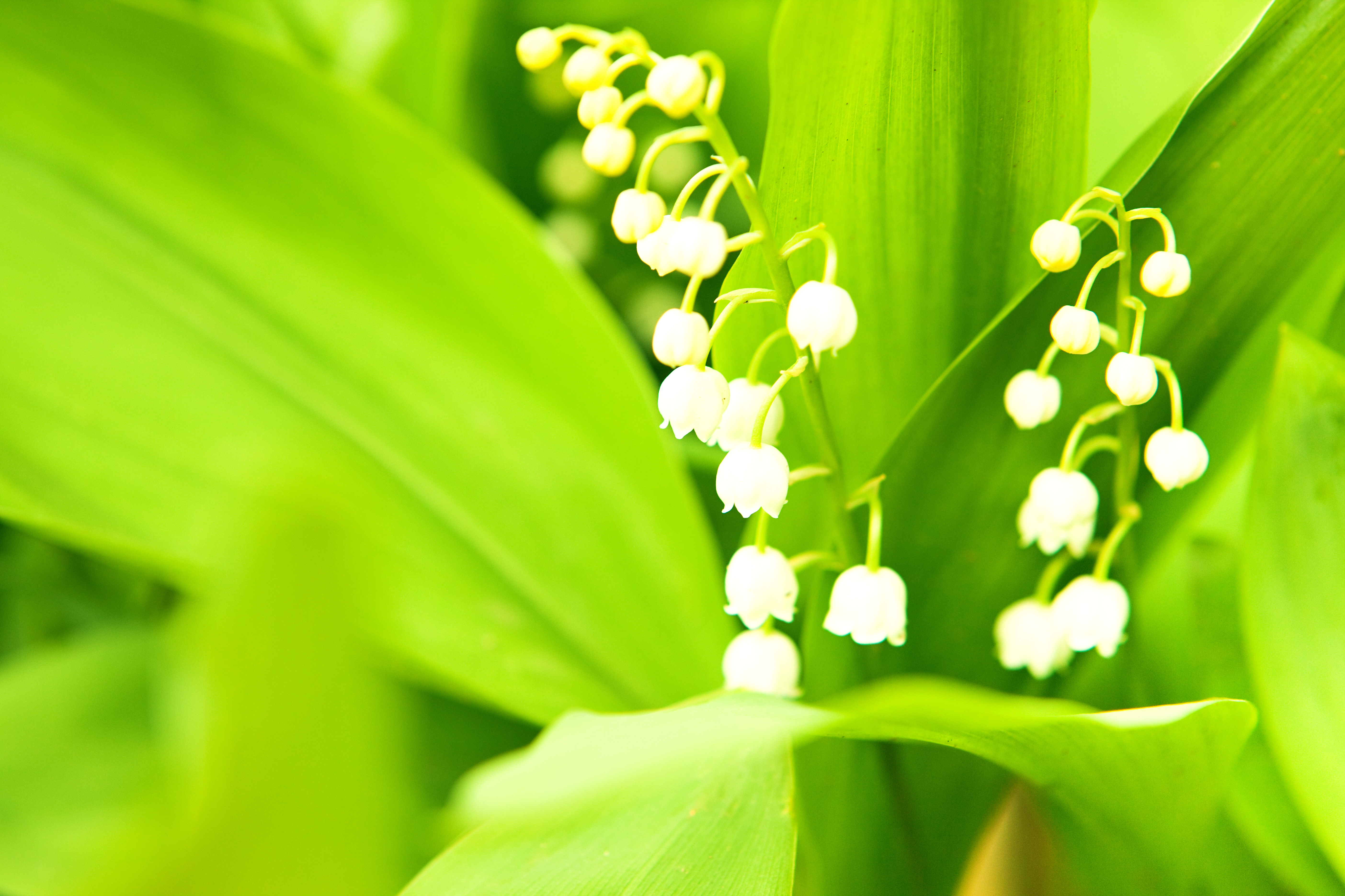 White flower on green photo