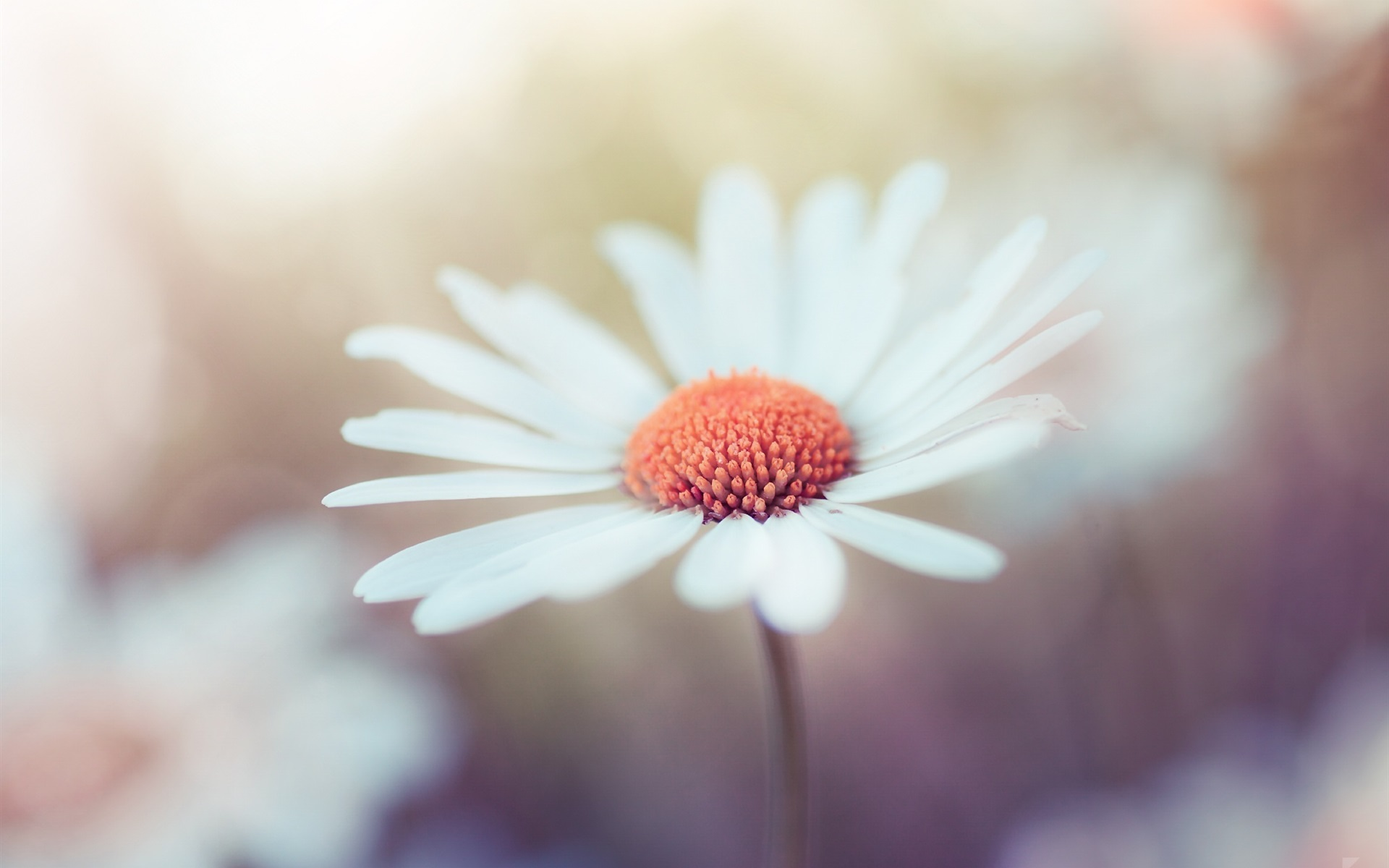 Free Photo White Flower Photography Growth Leaves Green Free