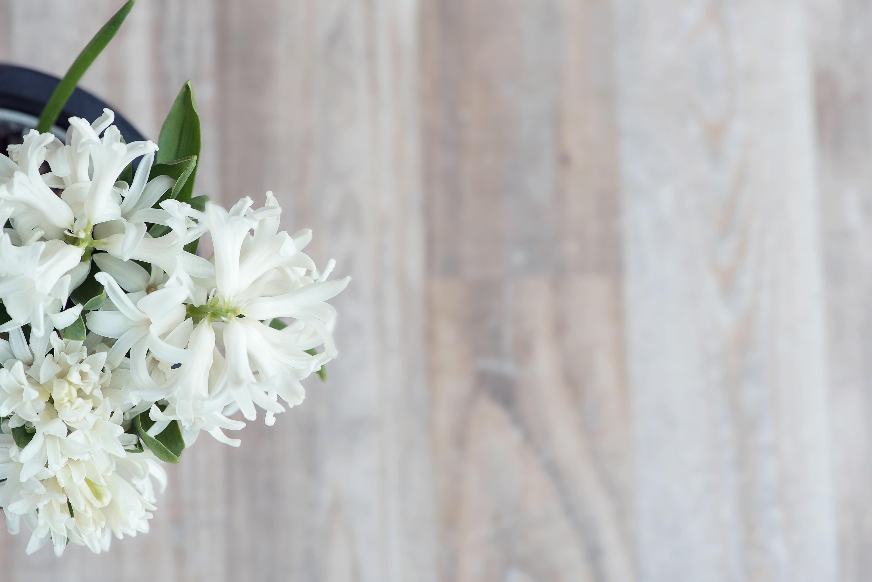 White flowers photo
