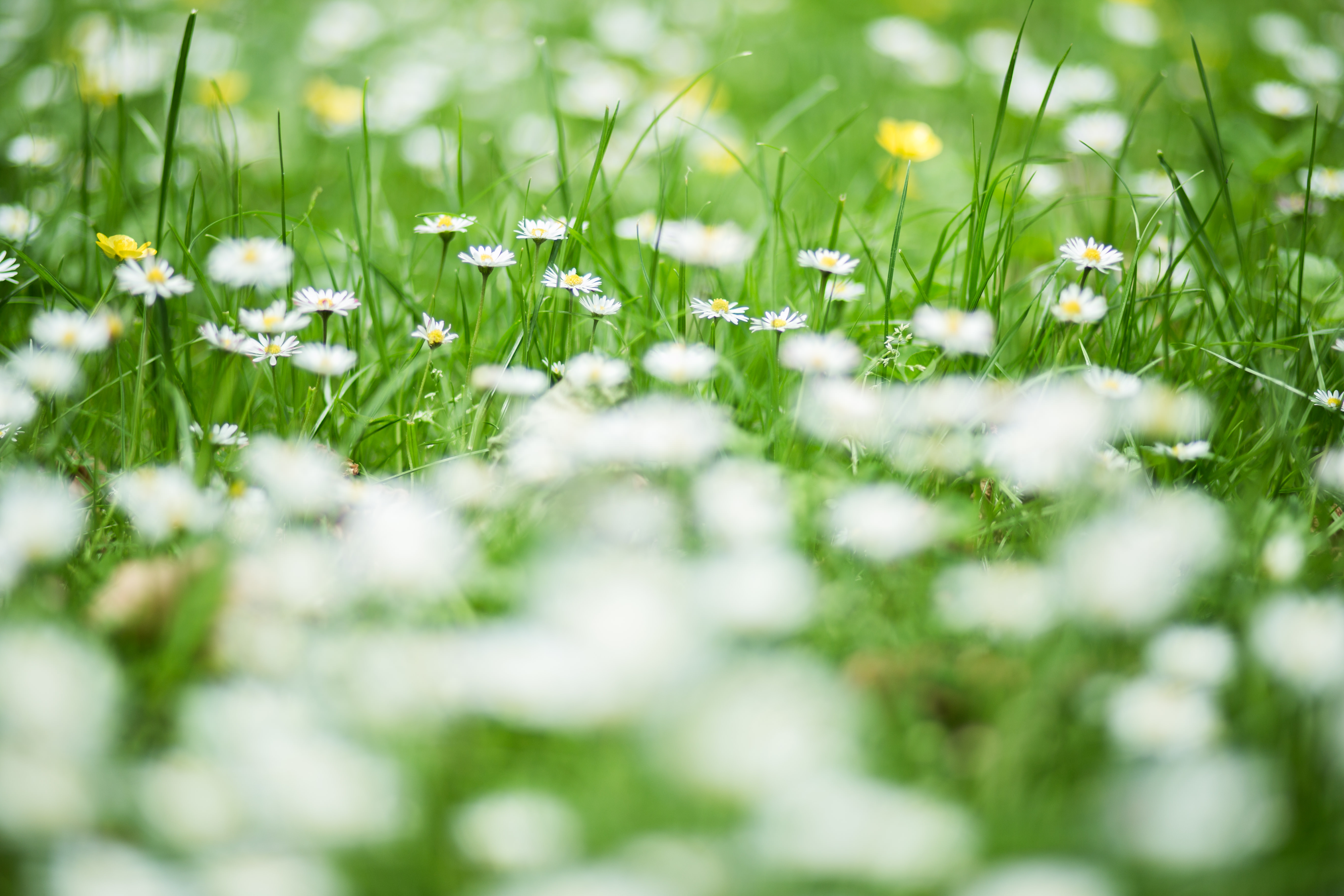 Free Photo White Flowers White Plants Green Free Download
