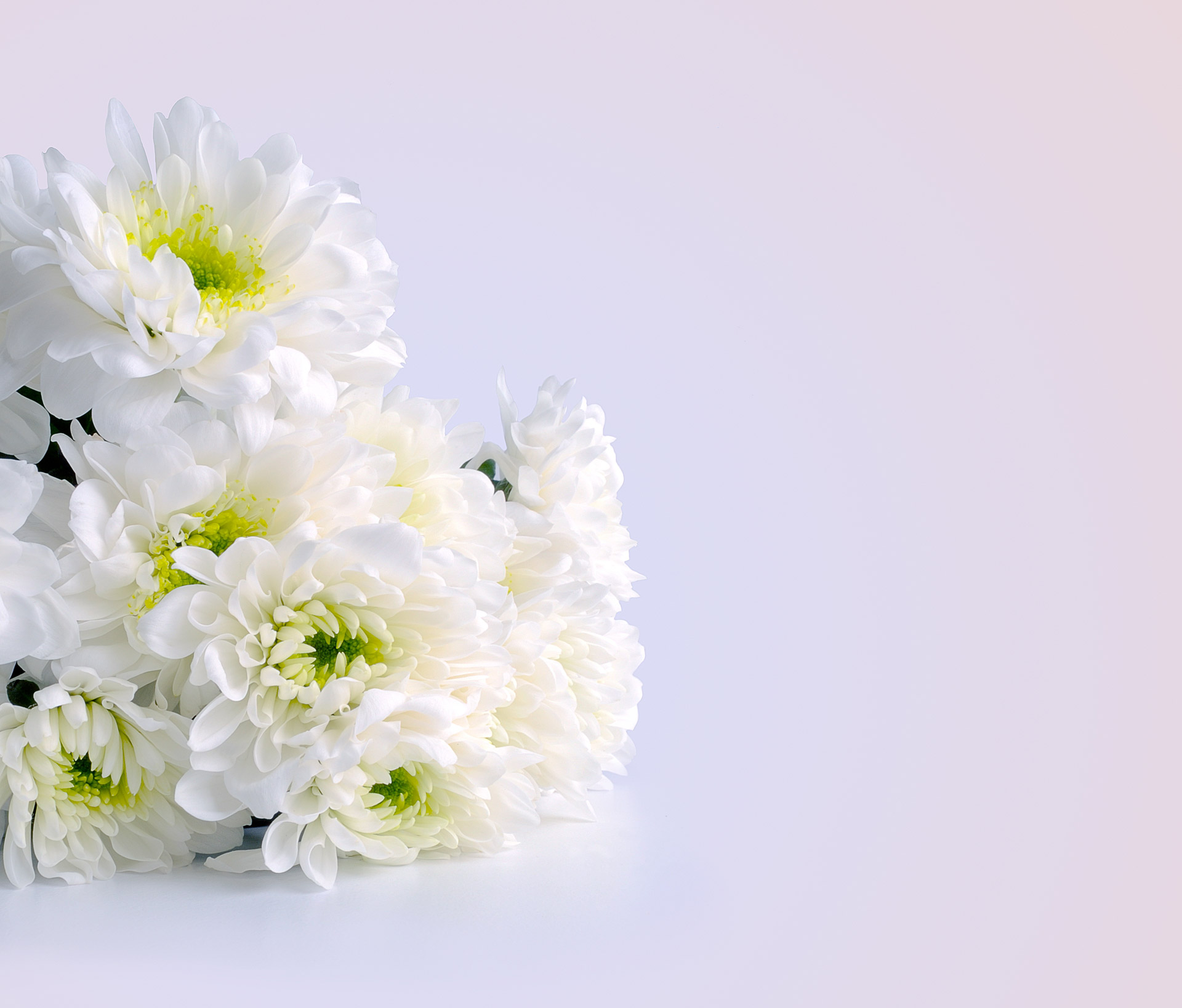 White Flowers For The Holiday Free Stock Photo - Public Domain Pictures