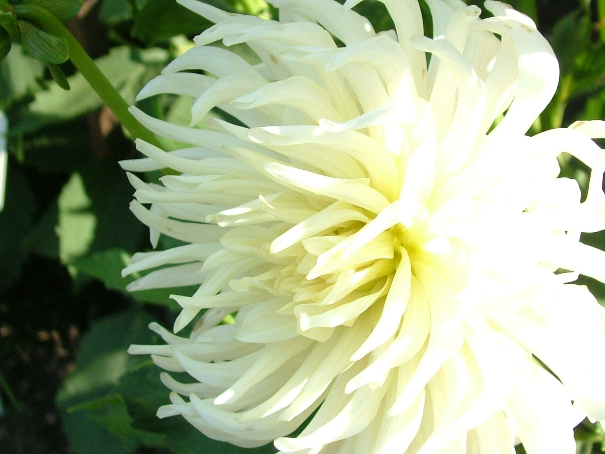 Related image   Flowers   Pinterest   Flowers, Flower and White flowers