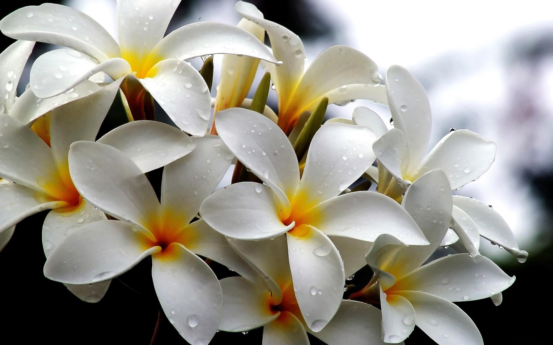 Free Photo White Flowers Nature White Garden Free Download