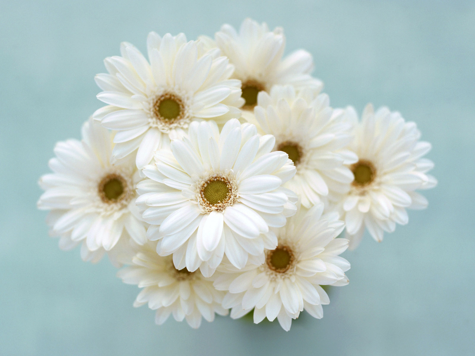 Free Photo White Flowers Plant Spring Summer Free Download