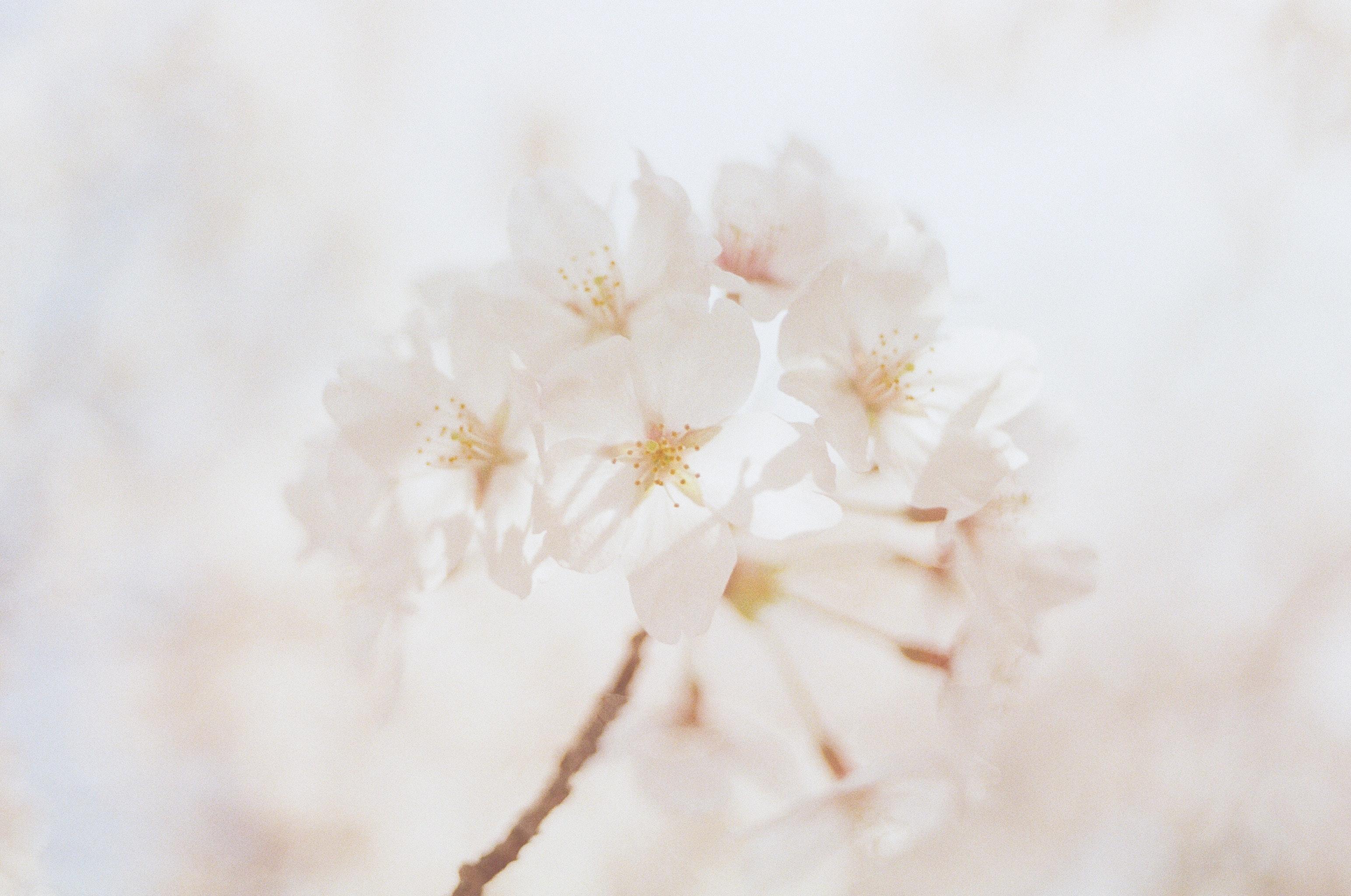 1000+ Beautiful White Flowers Photos · Pexels · Free Stock Photos