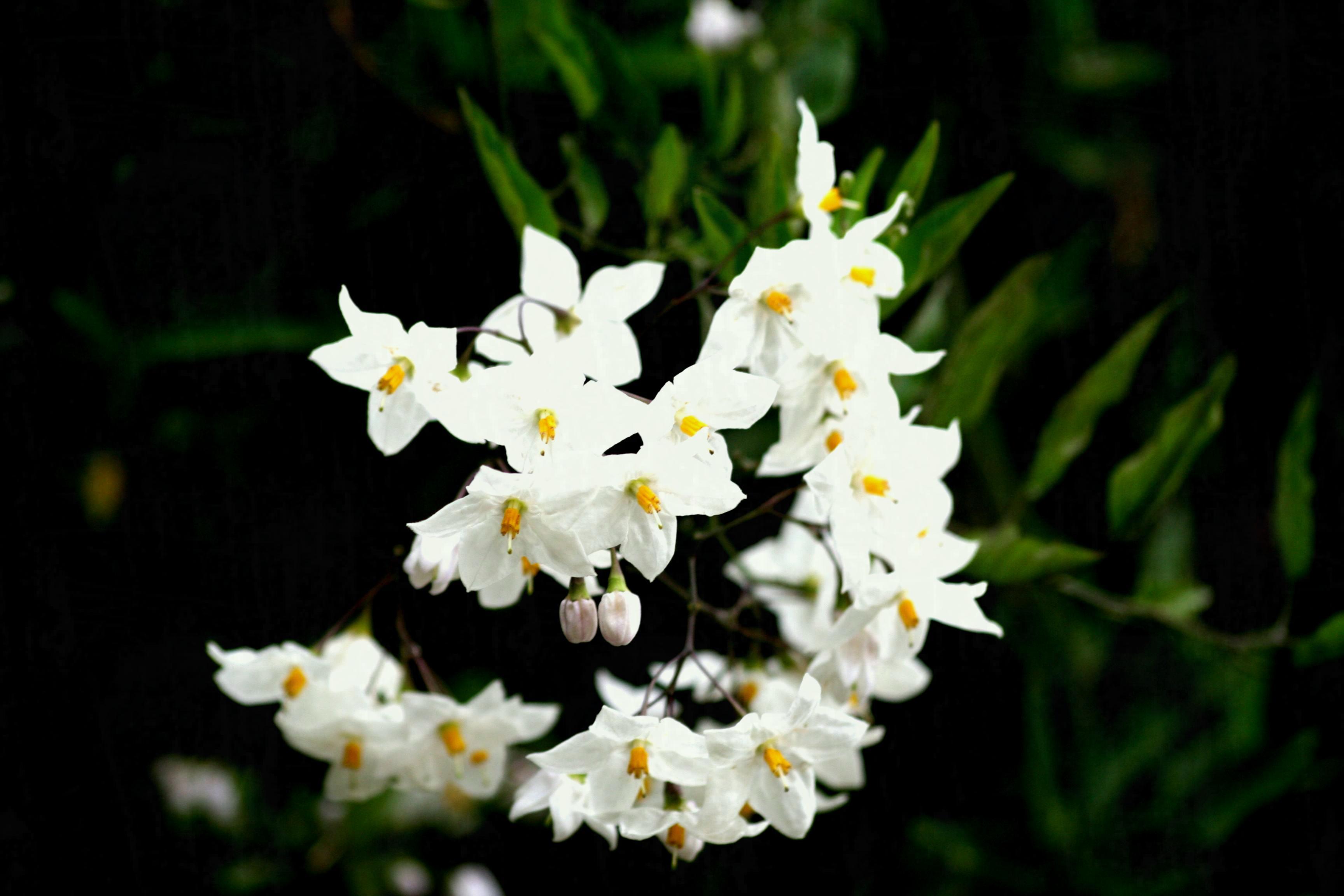 Small Little White Flowers K Hd Desktop Wallpaper For Ultra | Garden ...