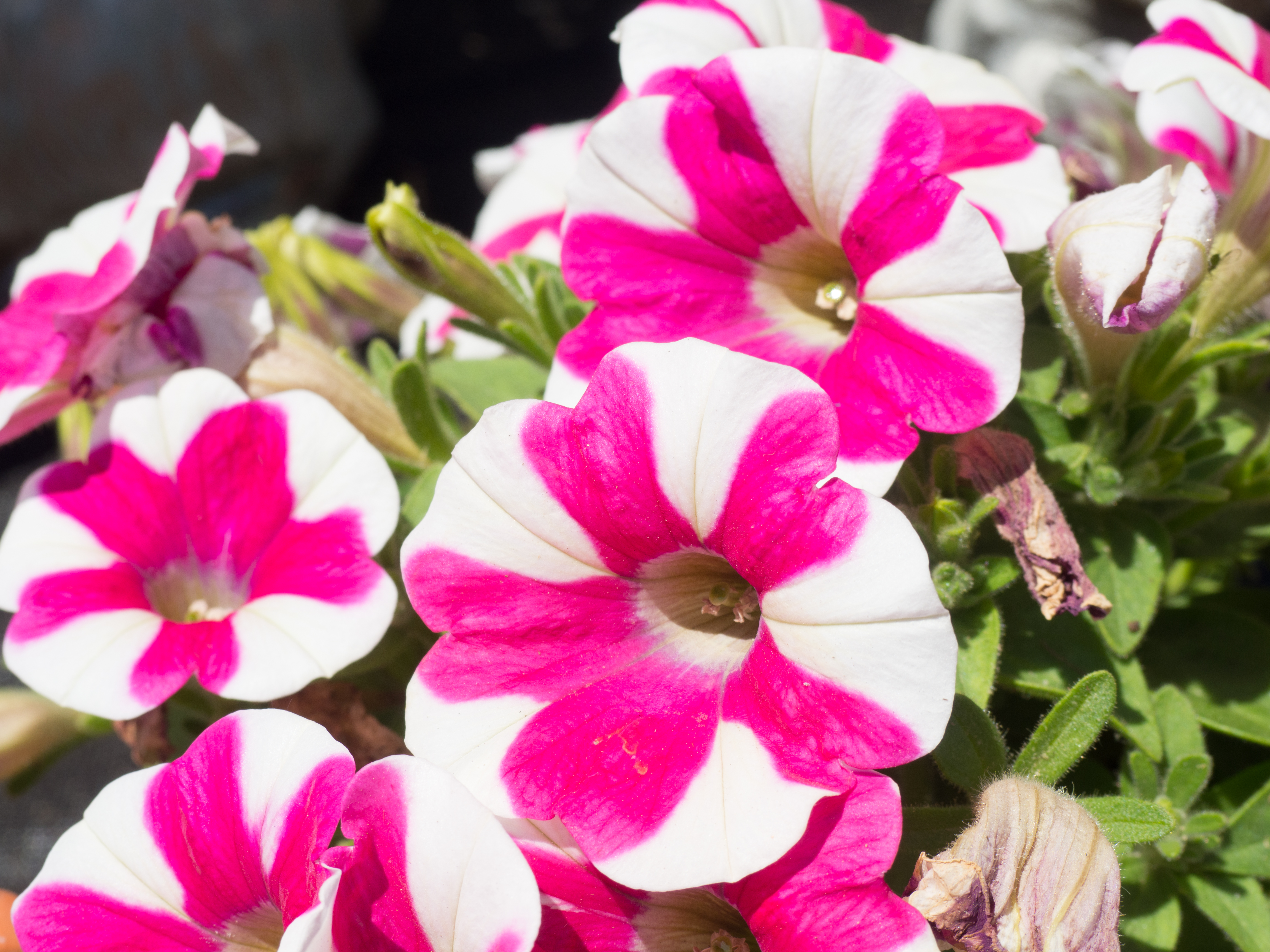Pink and White Flowers – MMT