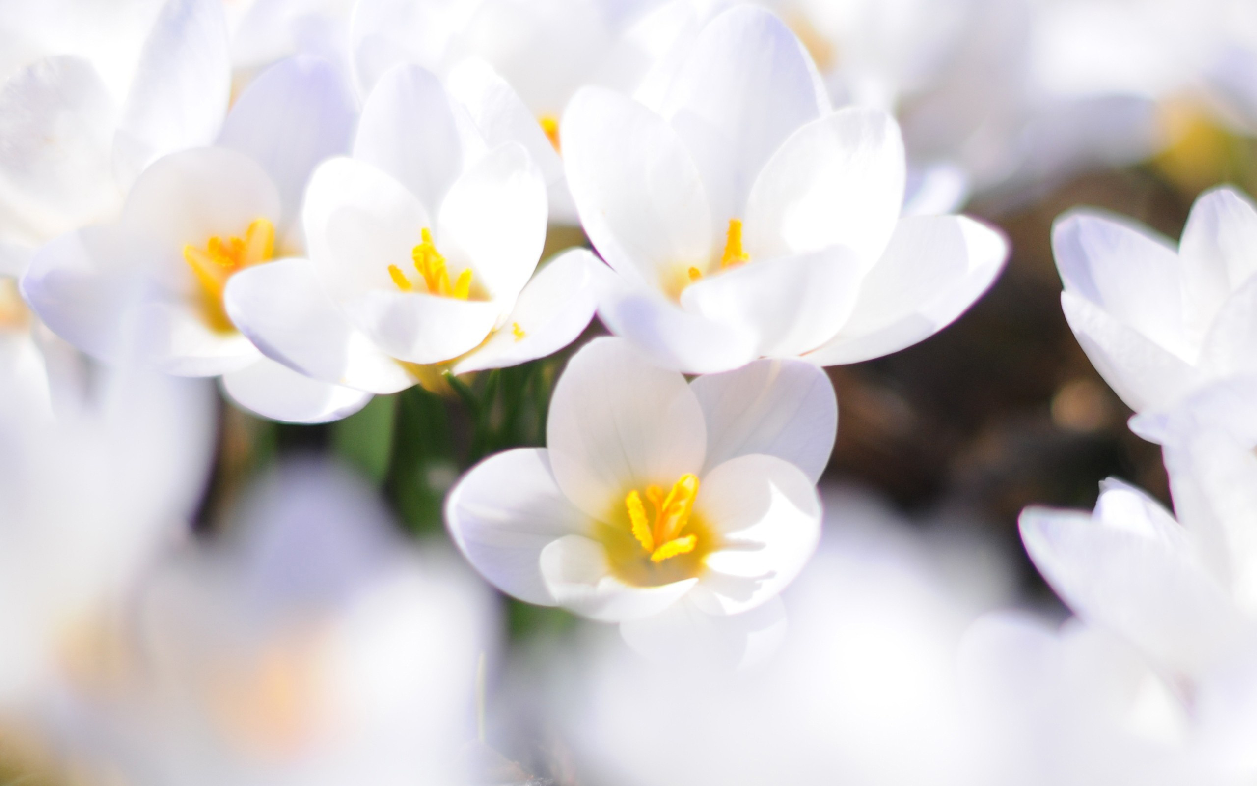 Download Free Modern Awesome White Flowers The Wallpapers ...