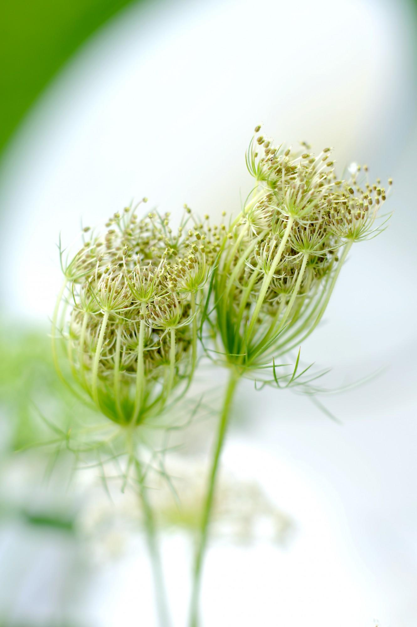 White Flowers - Eric van Lokven