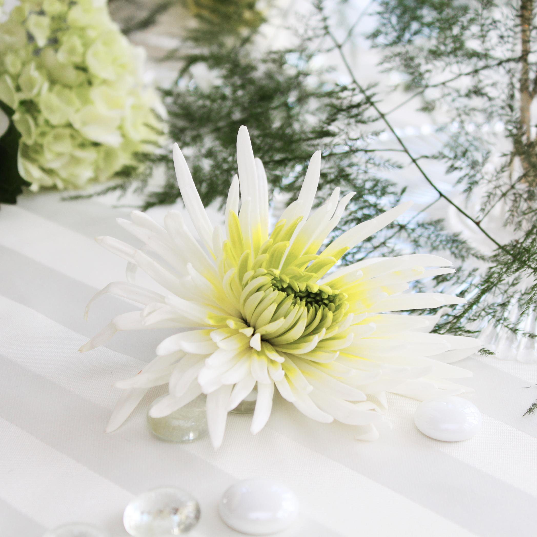 Free photo white flowers wed wedding pure free download jooinn white flowers wed wedding pure white hq photo mightylinksfo