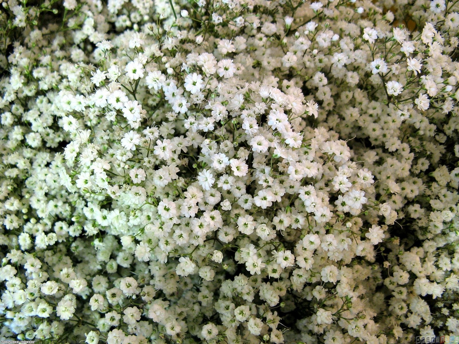 Free Photo Tiny Flowers Outdoors Petals Nature Free Download