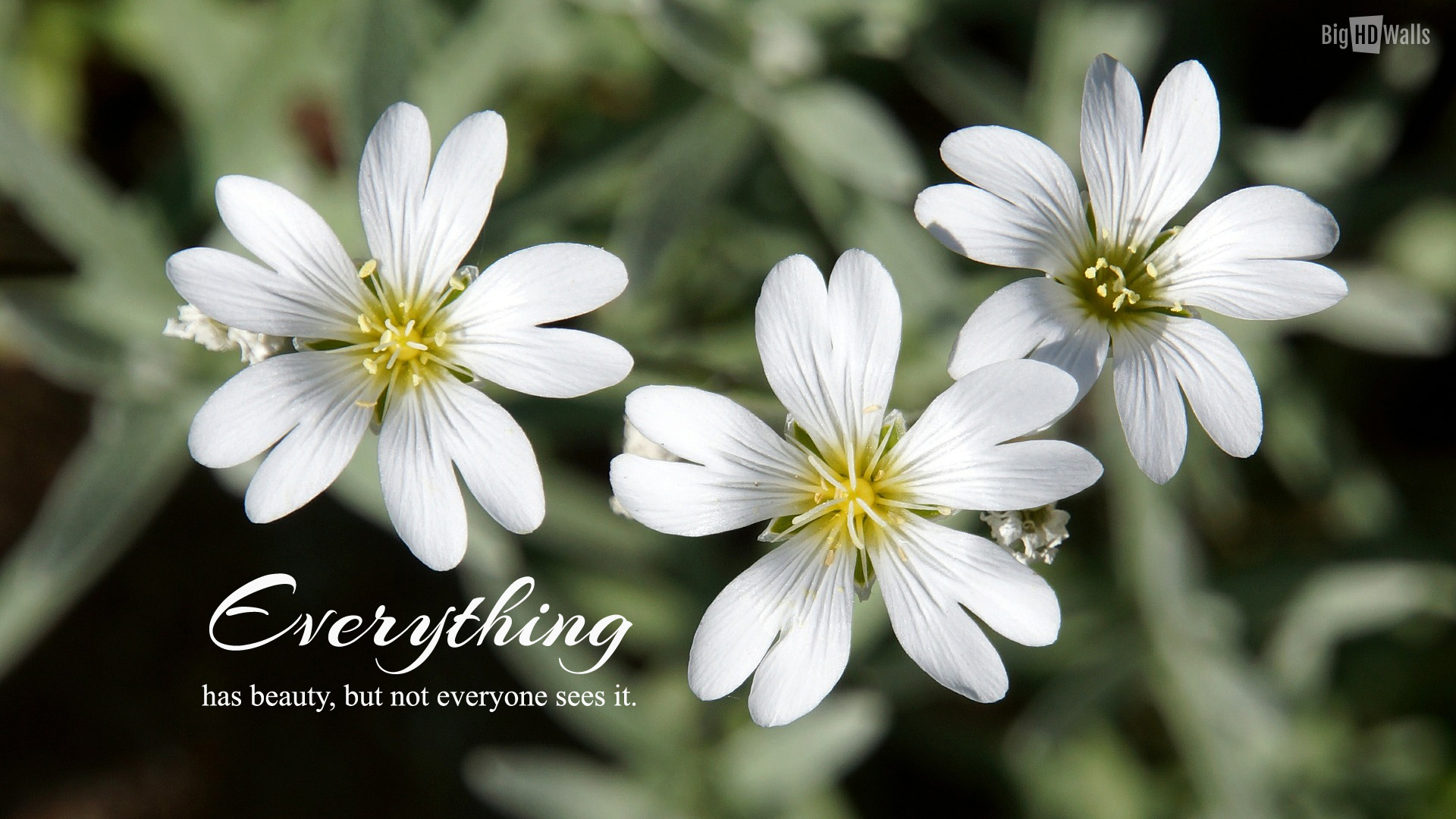 Free Photo White Flowers White Red Plants Free Download Jooinn