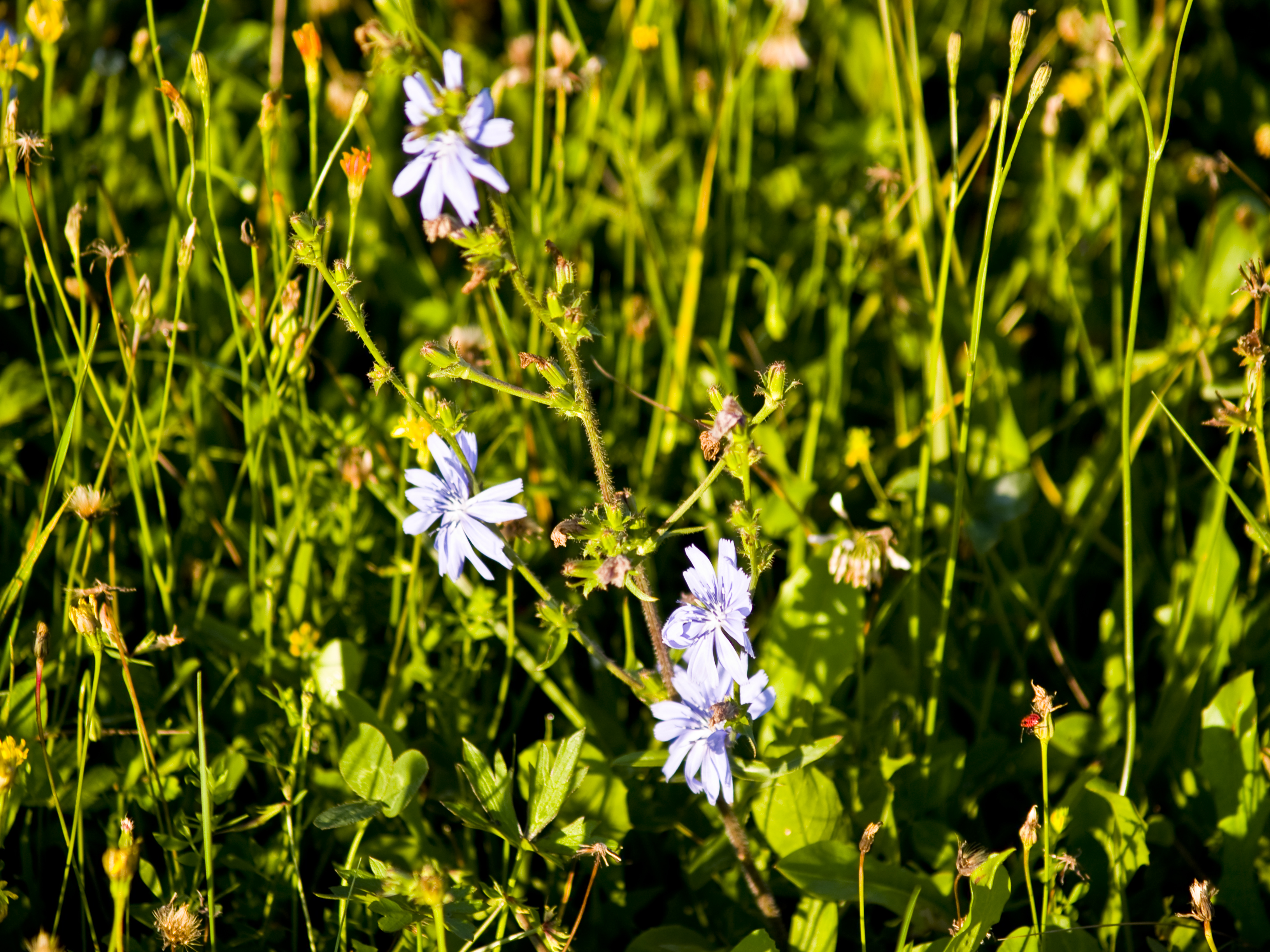Free Photo White Flowers In The Grass Plants Sunny White Free