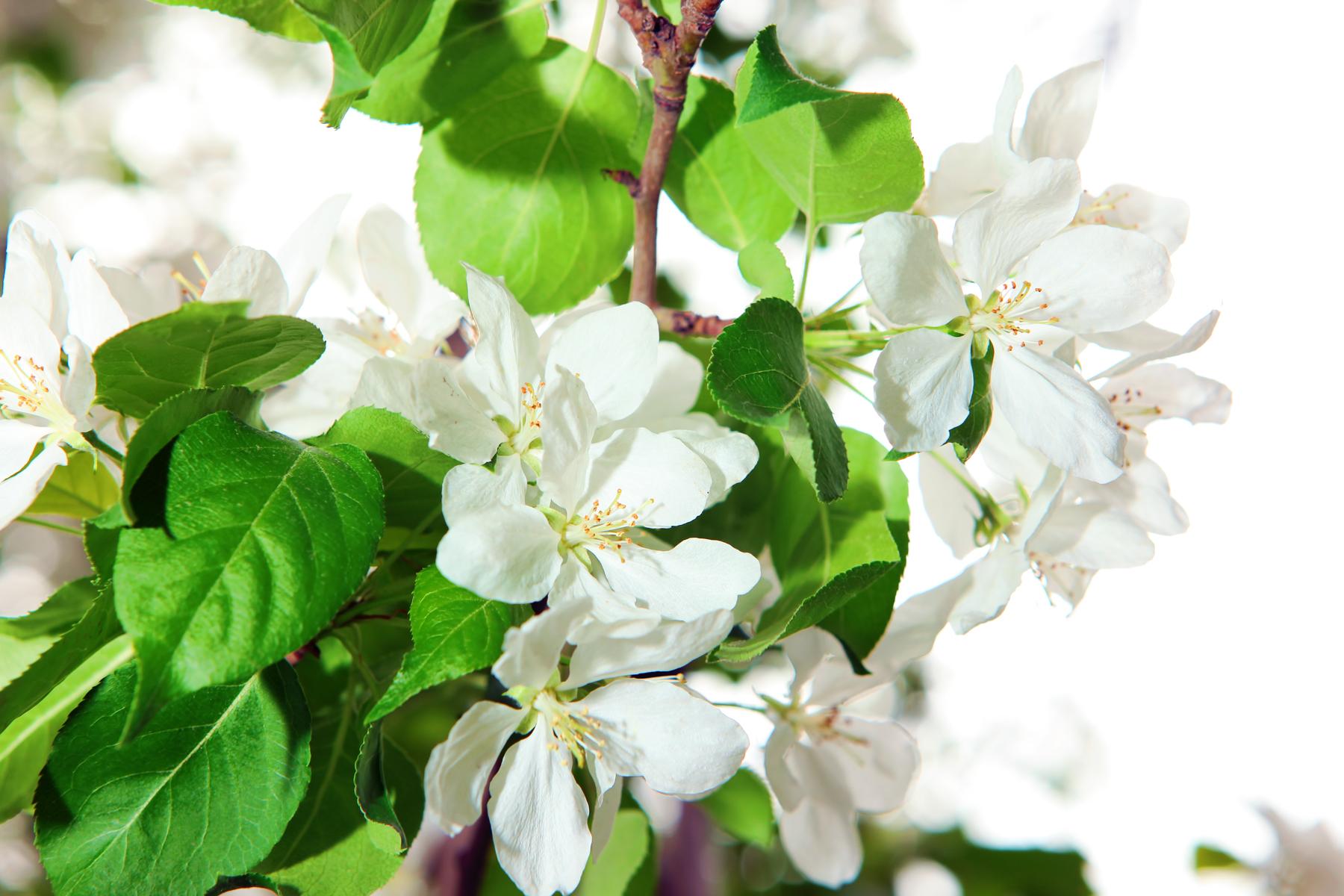 White flowers, Blur, Green, Spring, Plant, HQ Photo