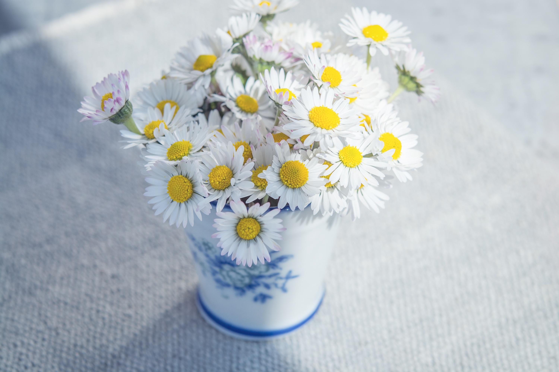 Free Photo White Fresh Flowers Fresh Nature Fragrance Free