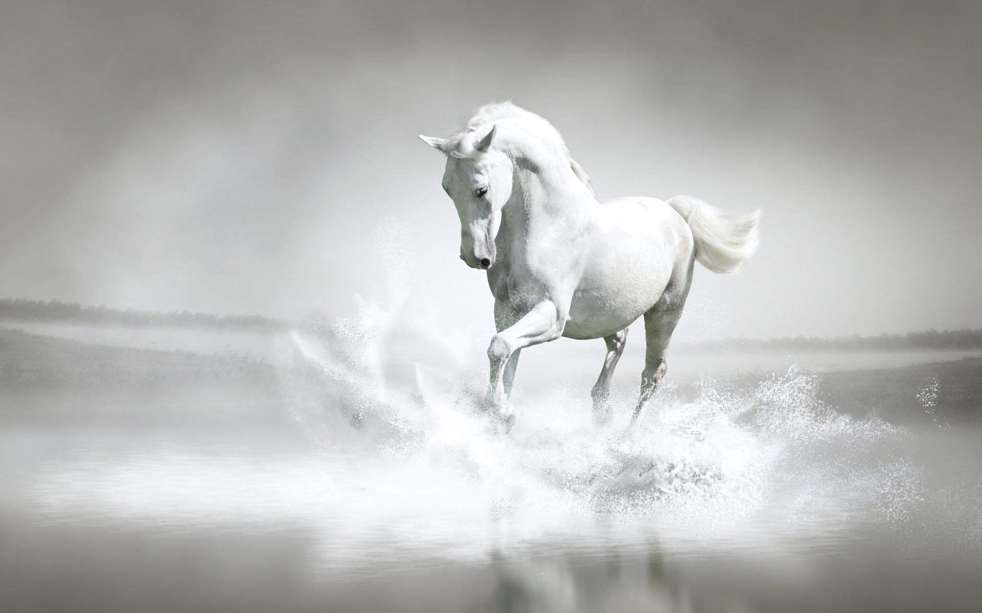 Free Photo White Horse Animal Fast Horse Free Download Jooinn