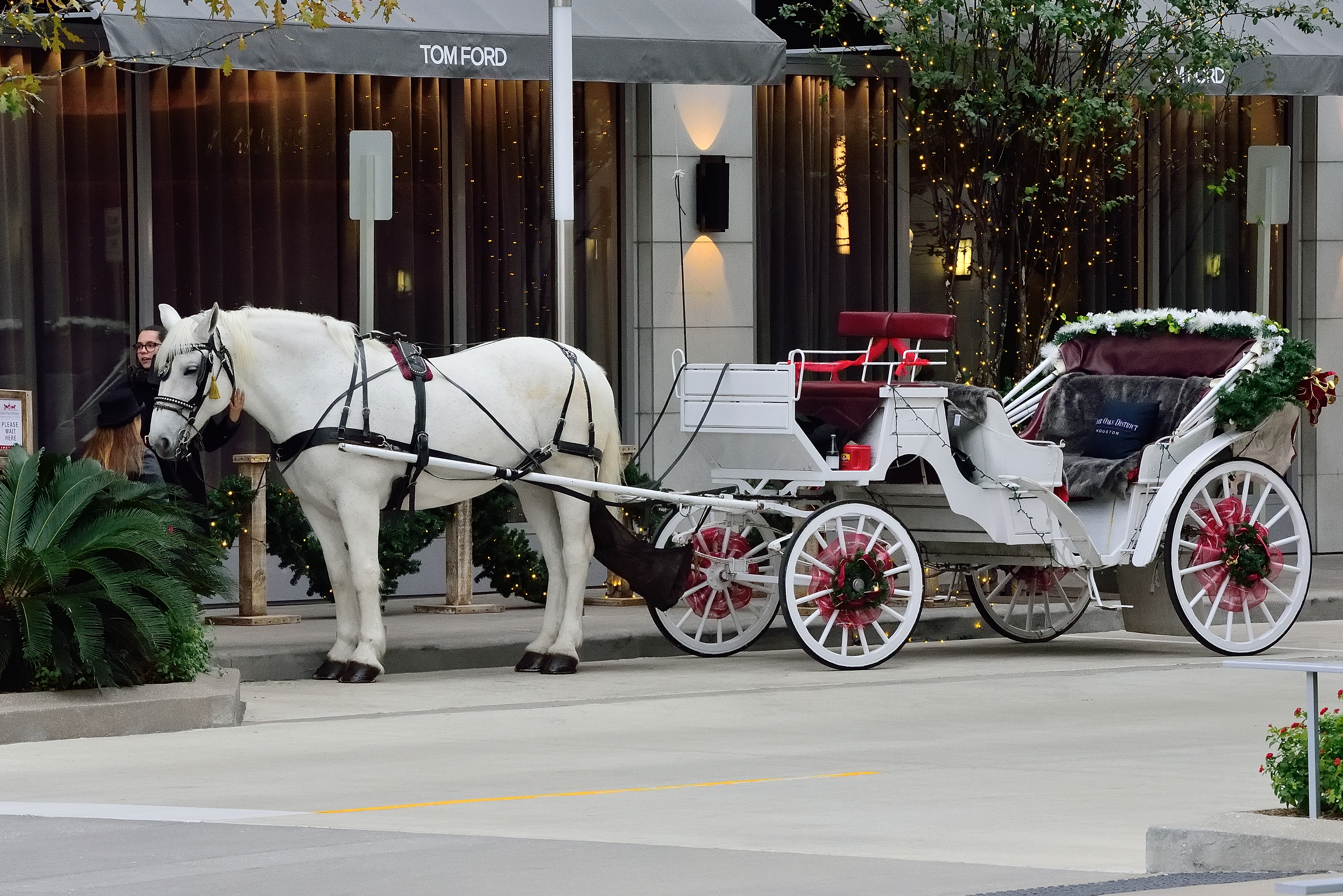 Free Photo White Horse Carriage Carriage Cart Horse Free Download Jooinn