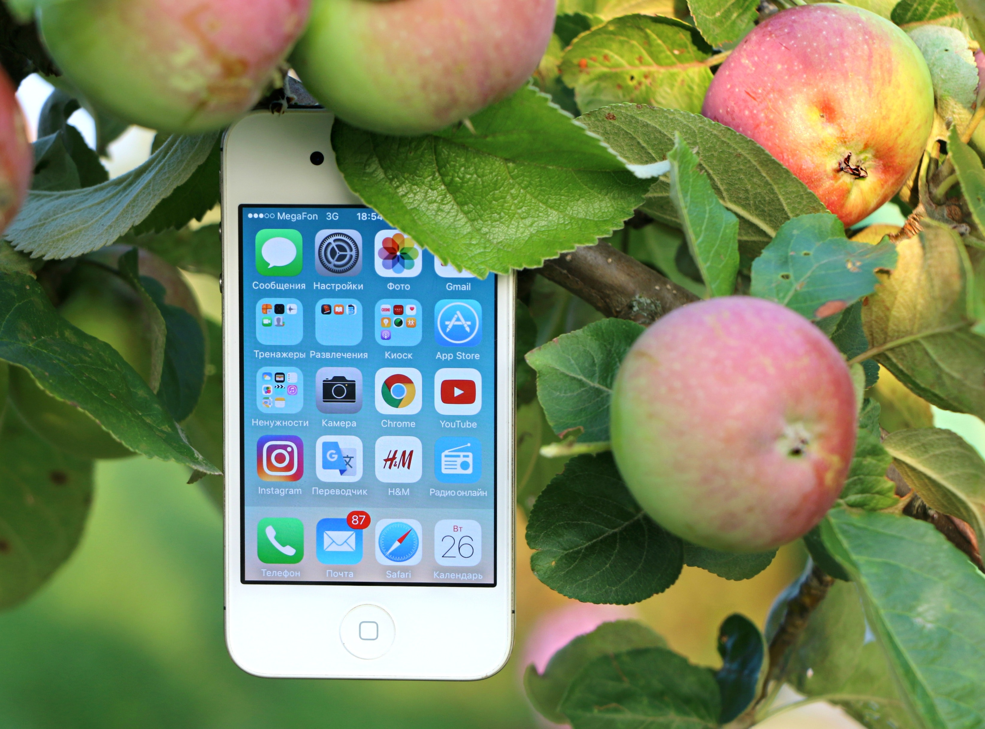 White iphone 4 hanging on branch photo