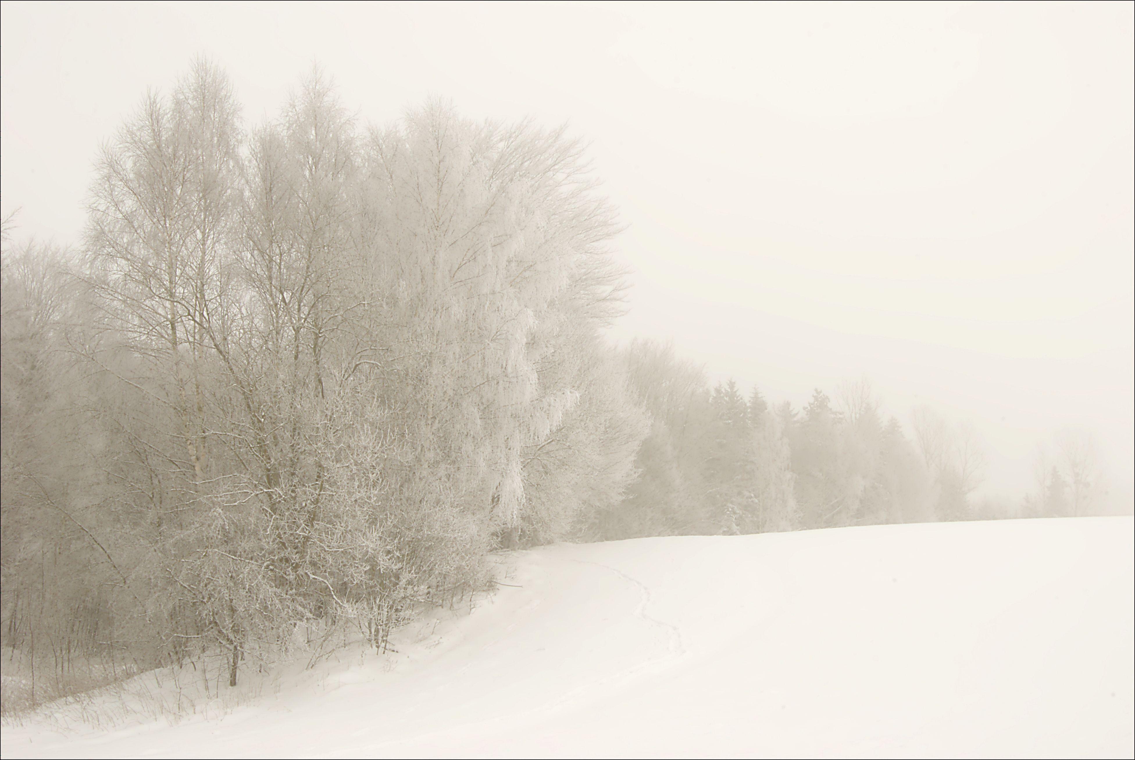 White landscape. | Blanco. | Pinterest | Landscaping