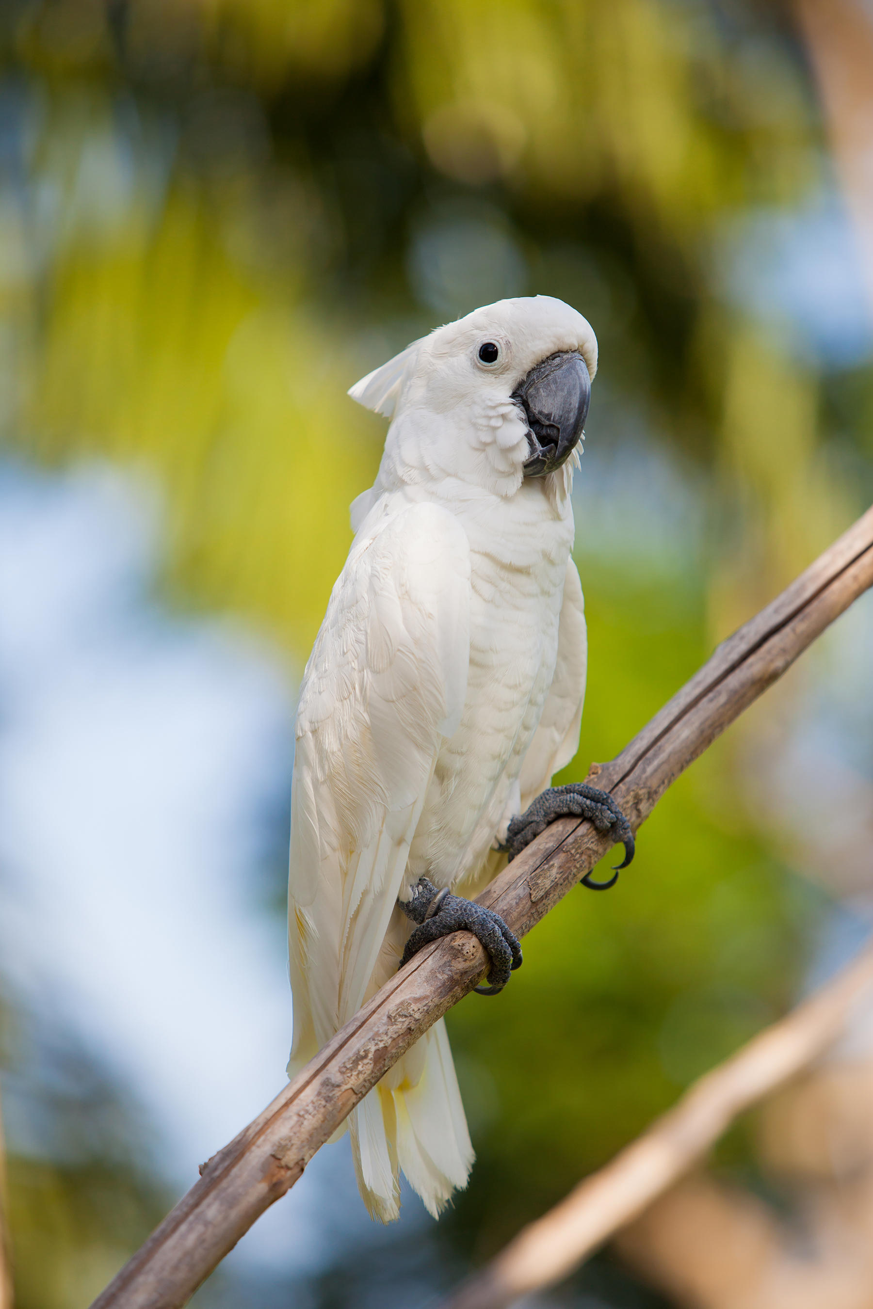 Branches of white parrots 52979 - Birds photo - Animal