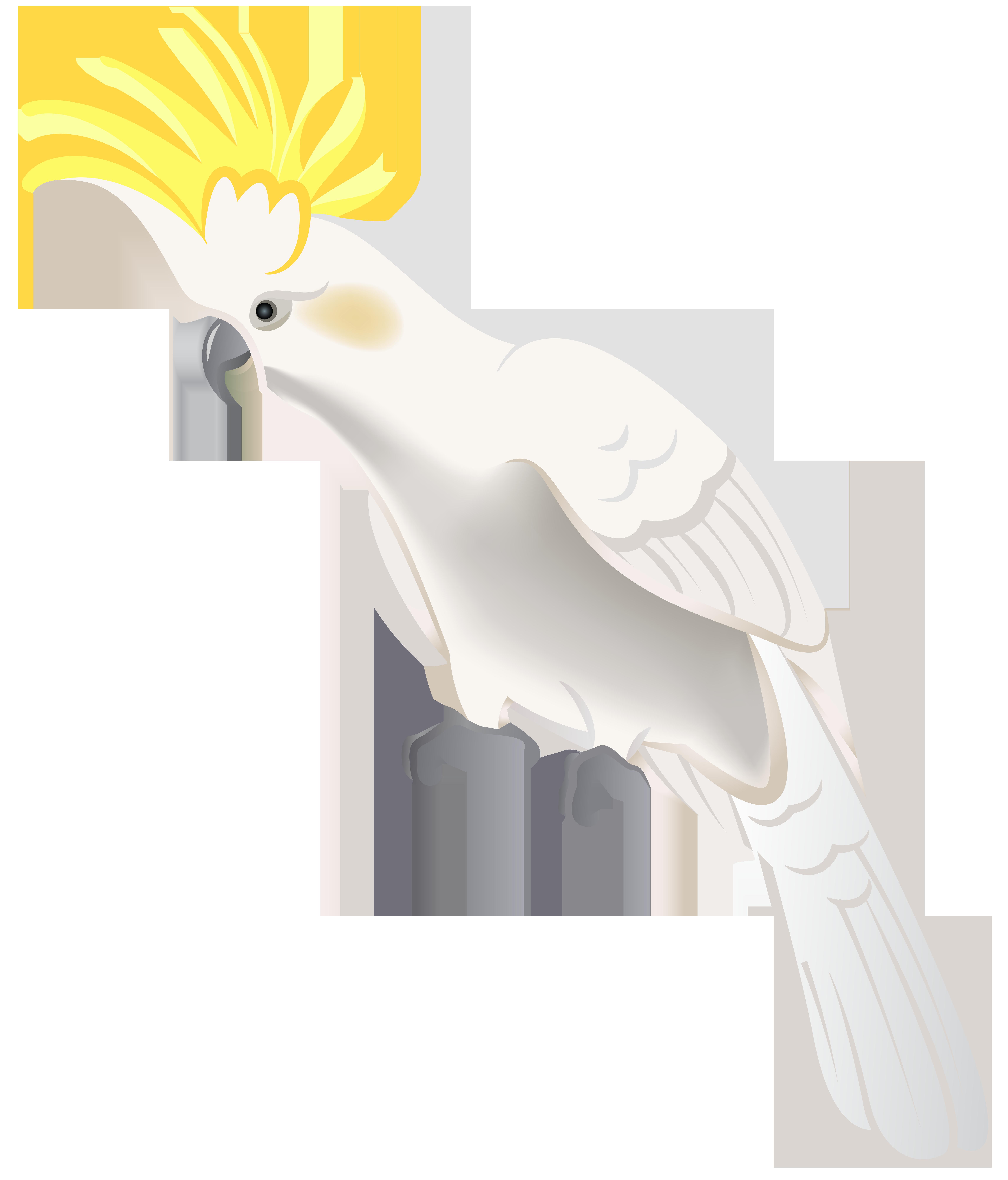 White Parrot PNG Clip Art - Best WEB Clipart