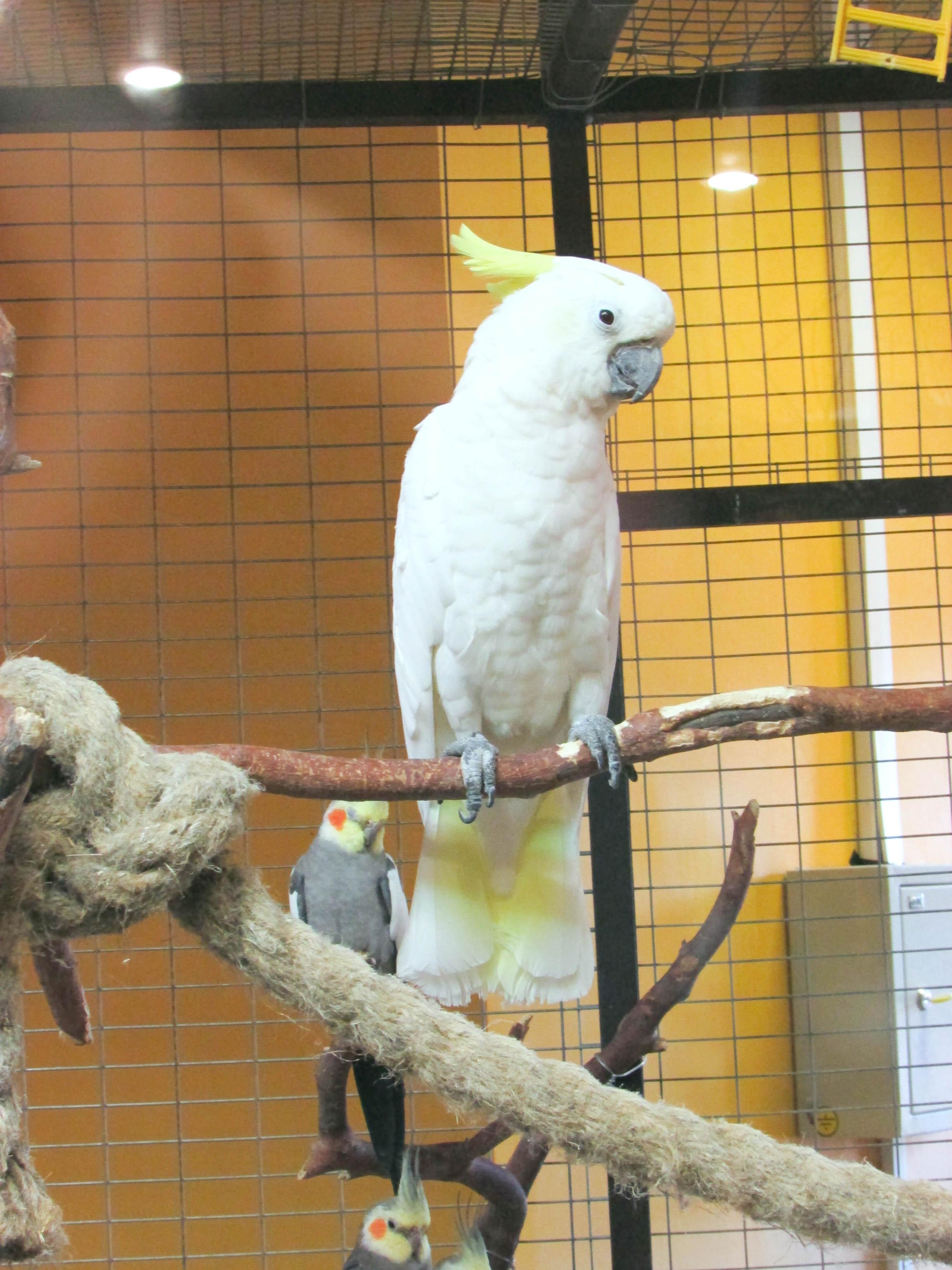 White Parrot, Bird, Cage, Parrot, White, HQ Photo