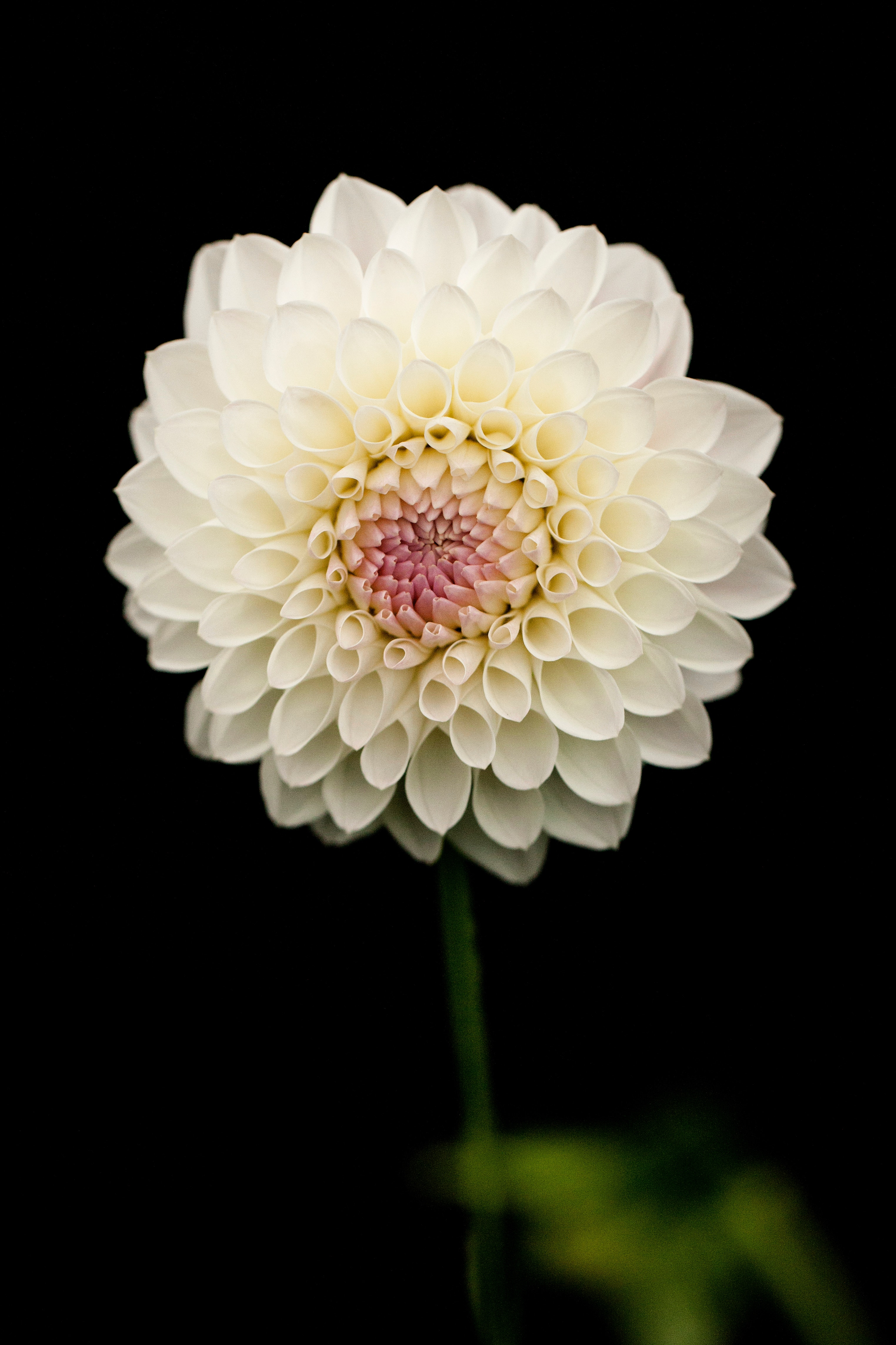 White petaled flower photo