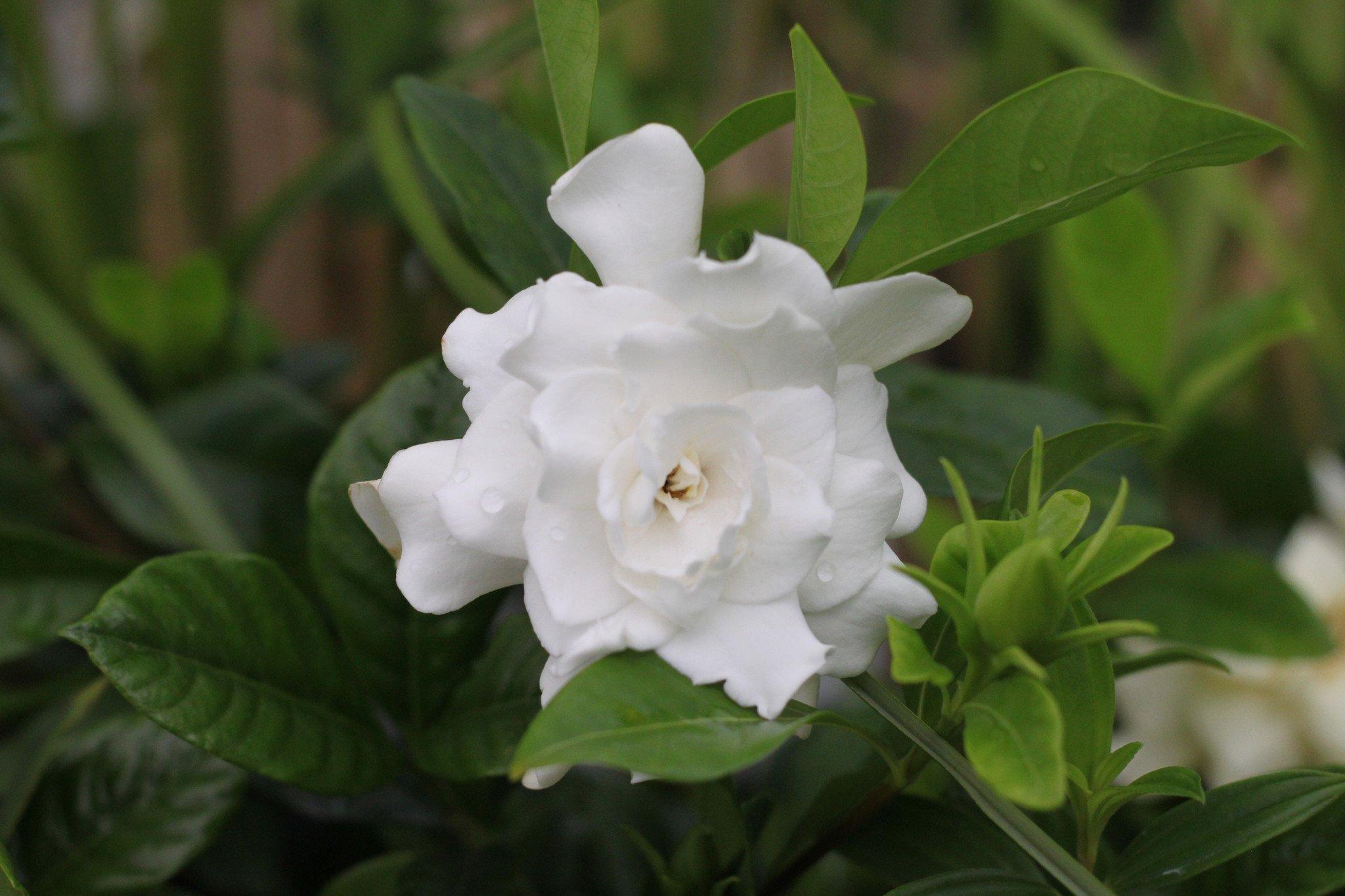 Free photo white plants hd wallpaper macro plant free white plants mightylinksfo