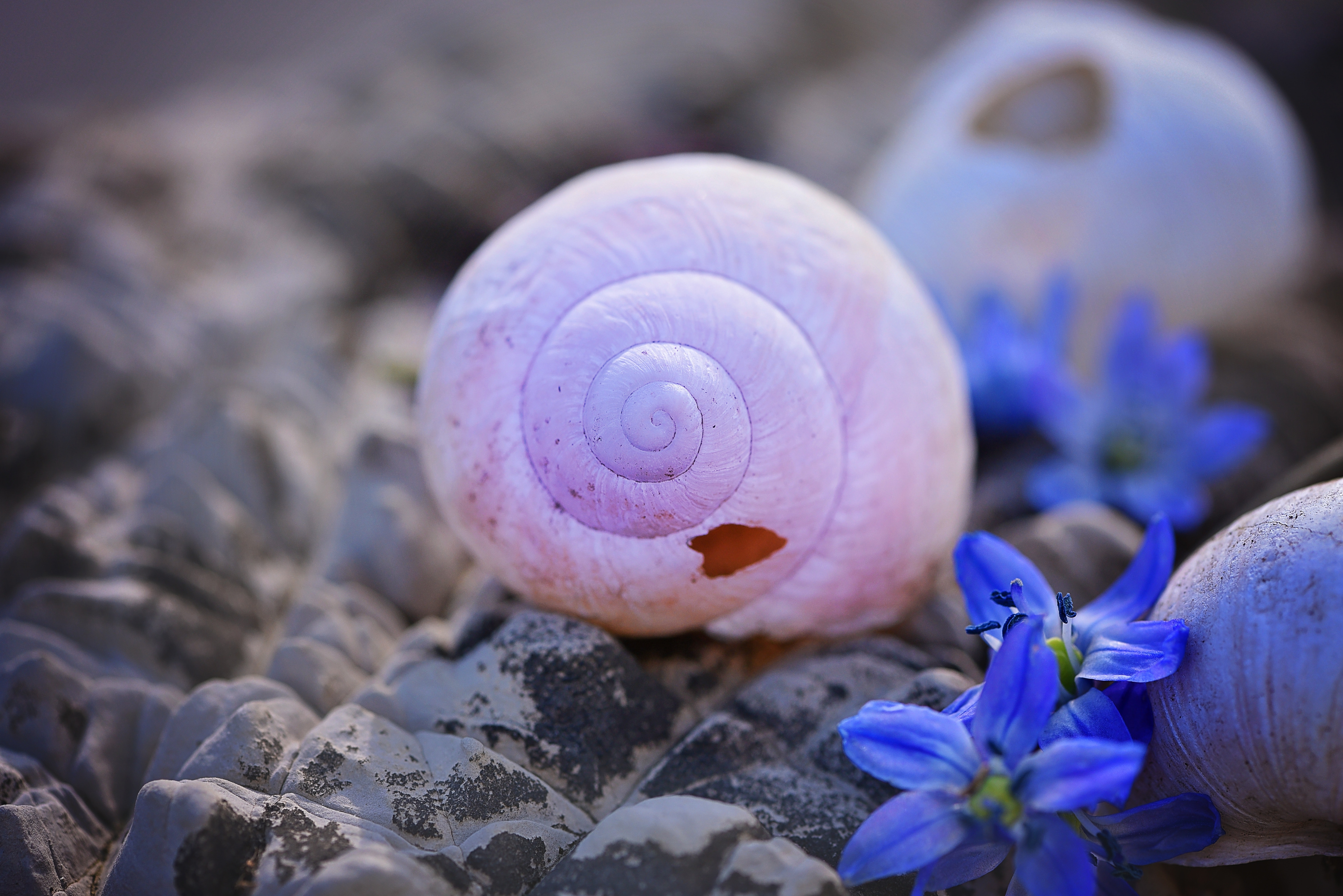 White snail shell on rocks photo