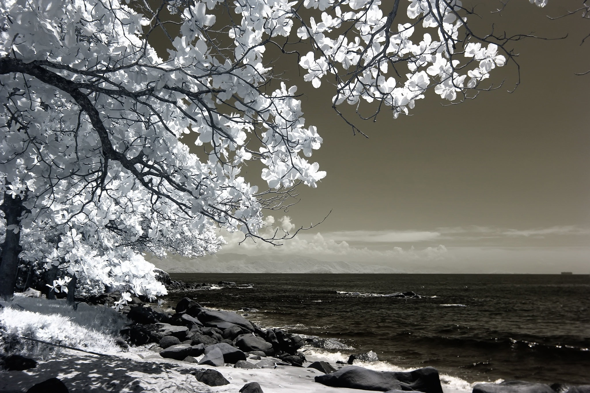 White Tree Beside Seashore Photo, Amazing, Outdoors, Weather, Waves, HQ Photo