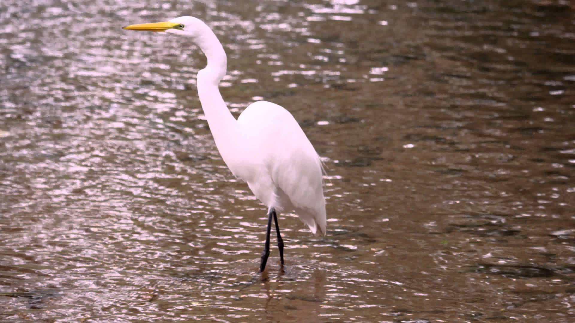 White water bird photo