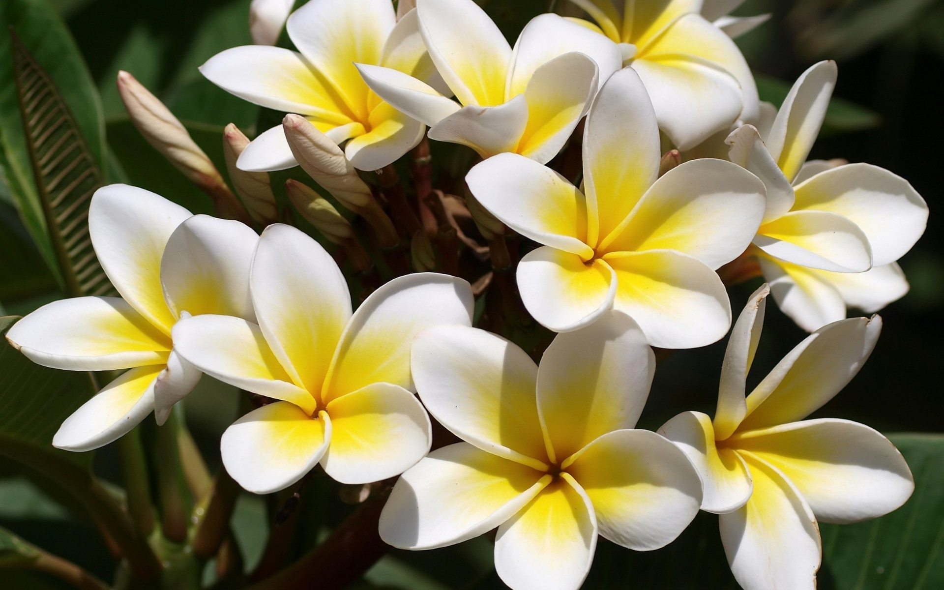 Flowers White Yellow Flowers wallpapers (Desktop, Phone, Tablet ...