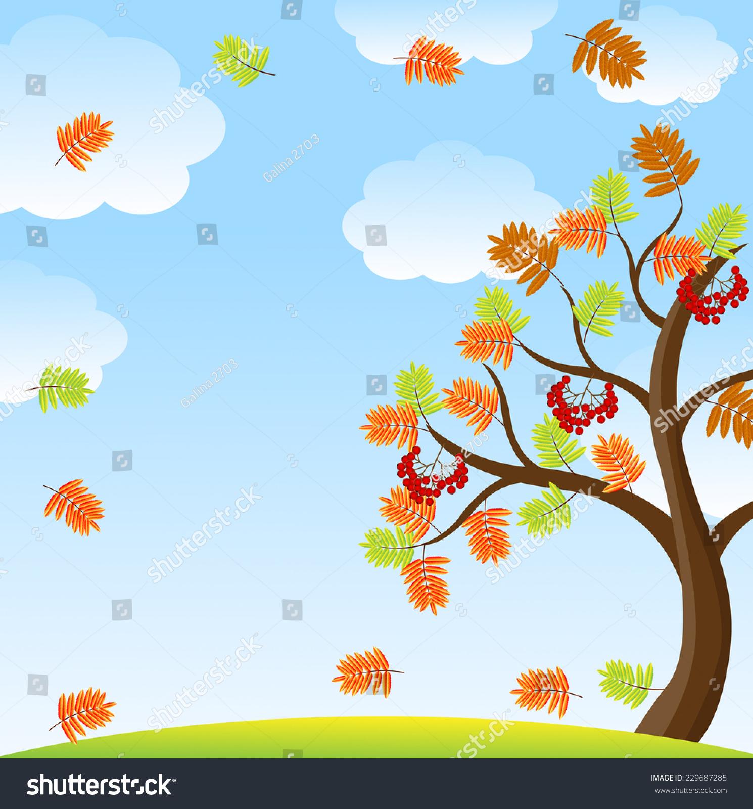 Tree Autumn Leaves Berries Wild Ash Stock Vector 229687285 ...