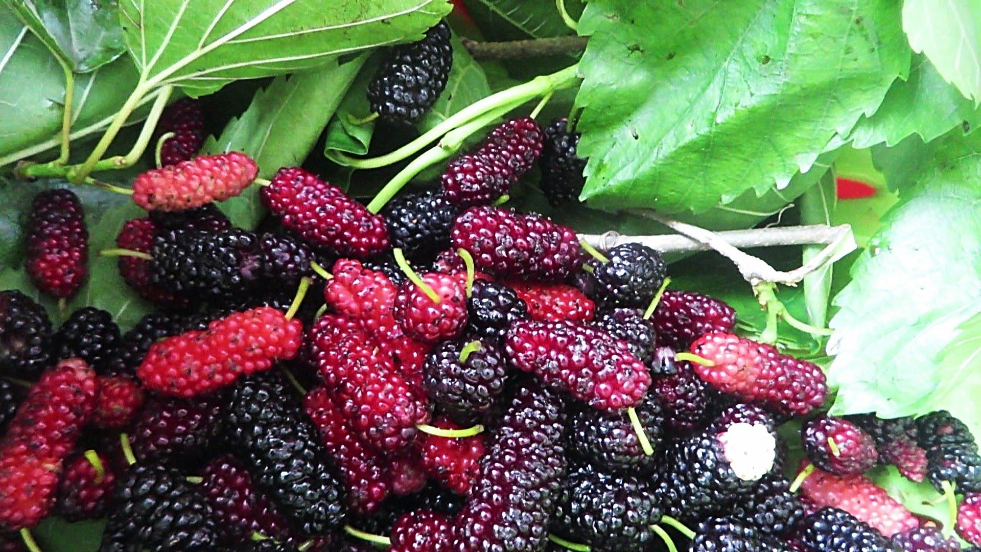 Wild Berries Hunt In Yokohama - YouTube