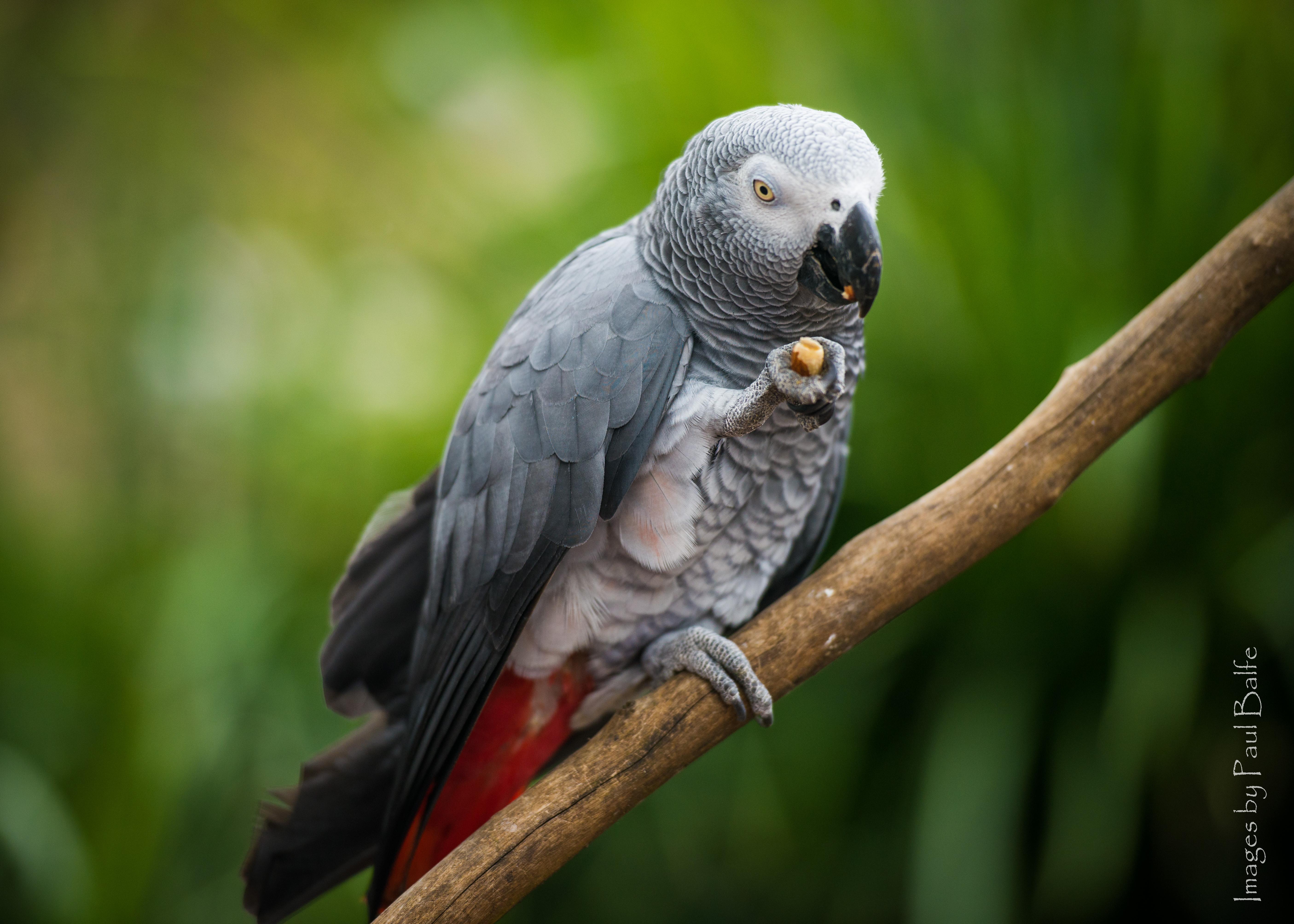 Wild Bird Conservation Act