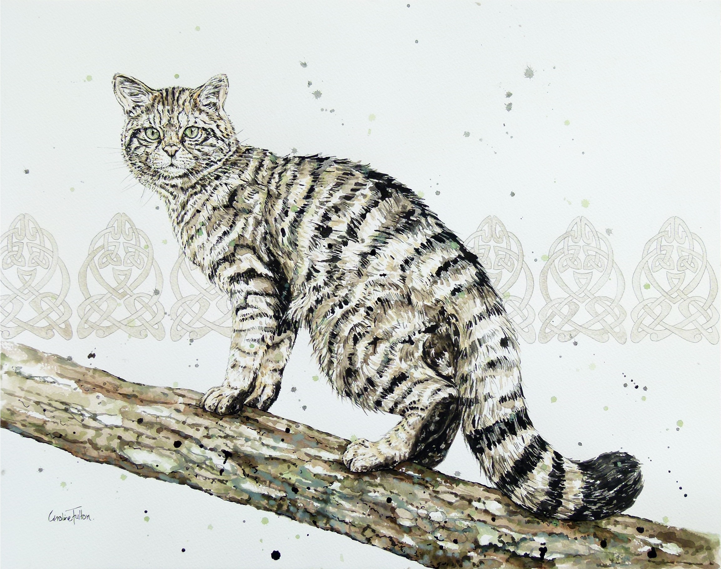 Wild cat painting photo