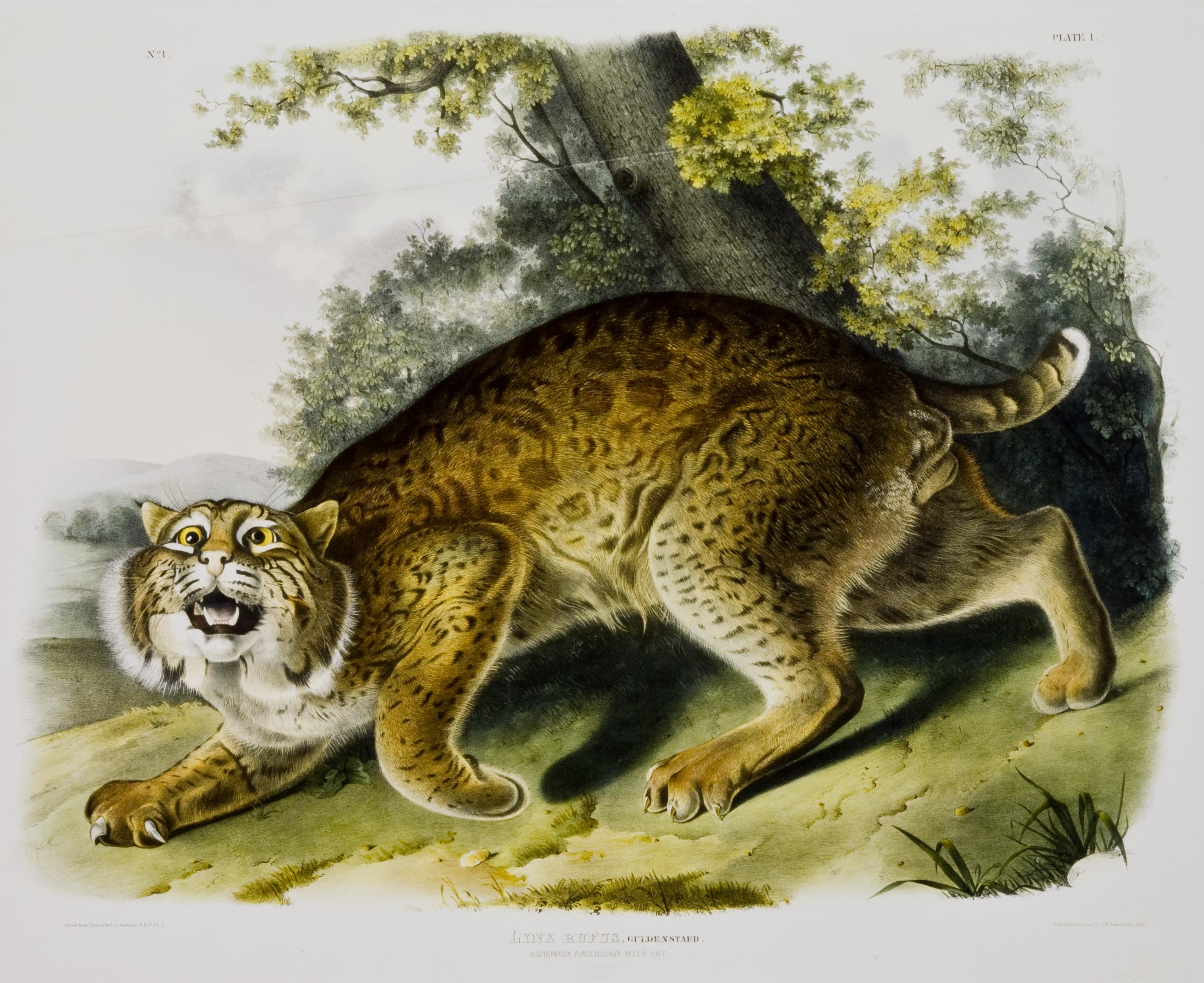 Wild cat painting photo