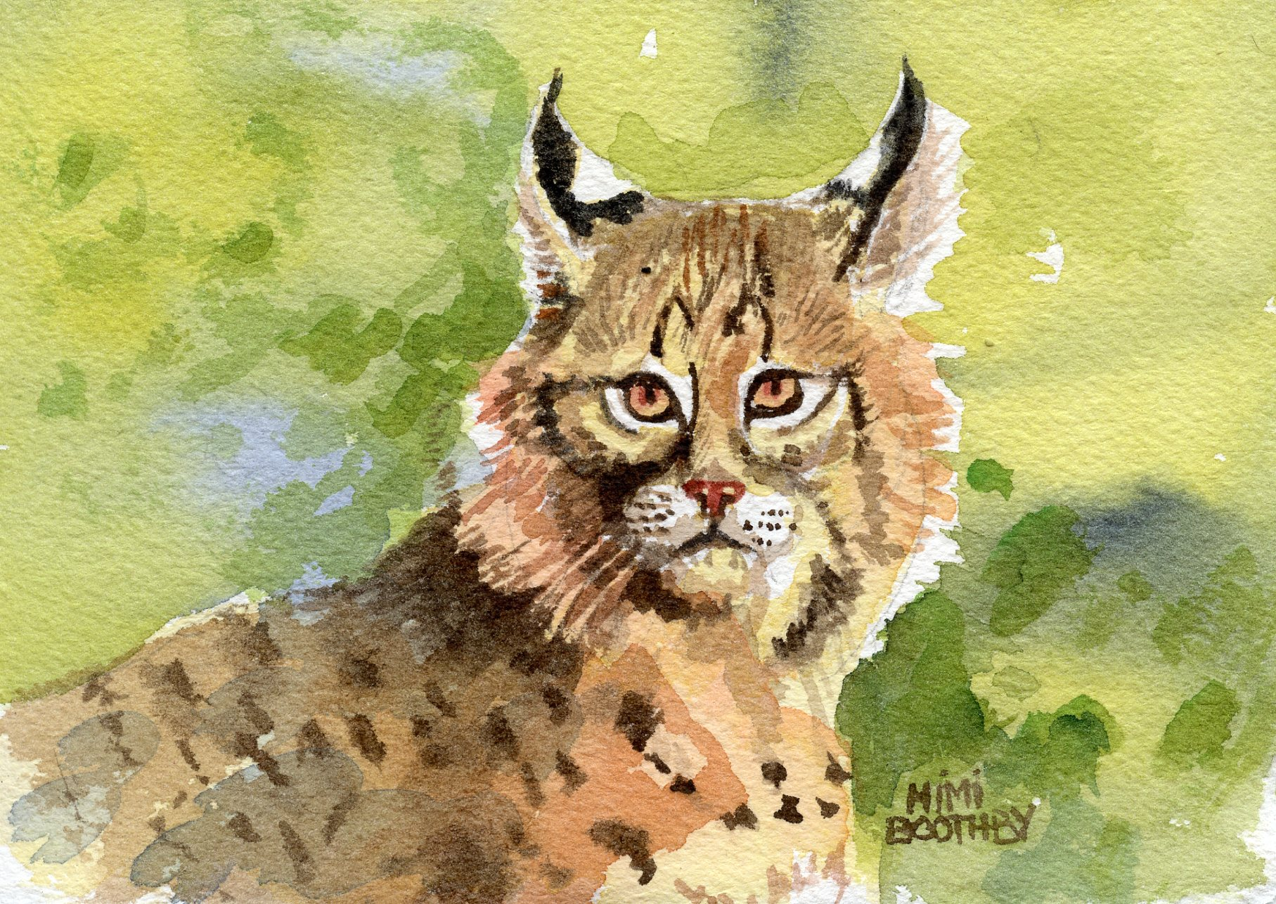 Bobcat – our small North American Wildcat » Watercolors by Mimi ...
